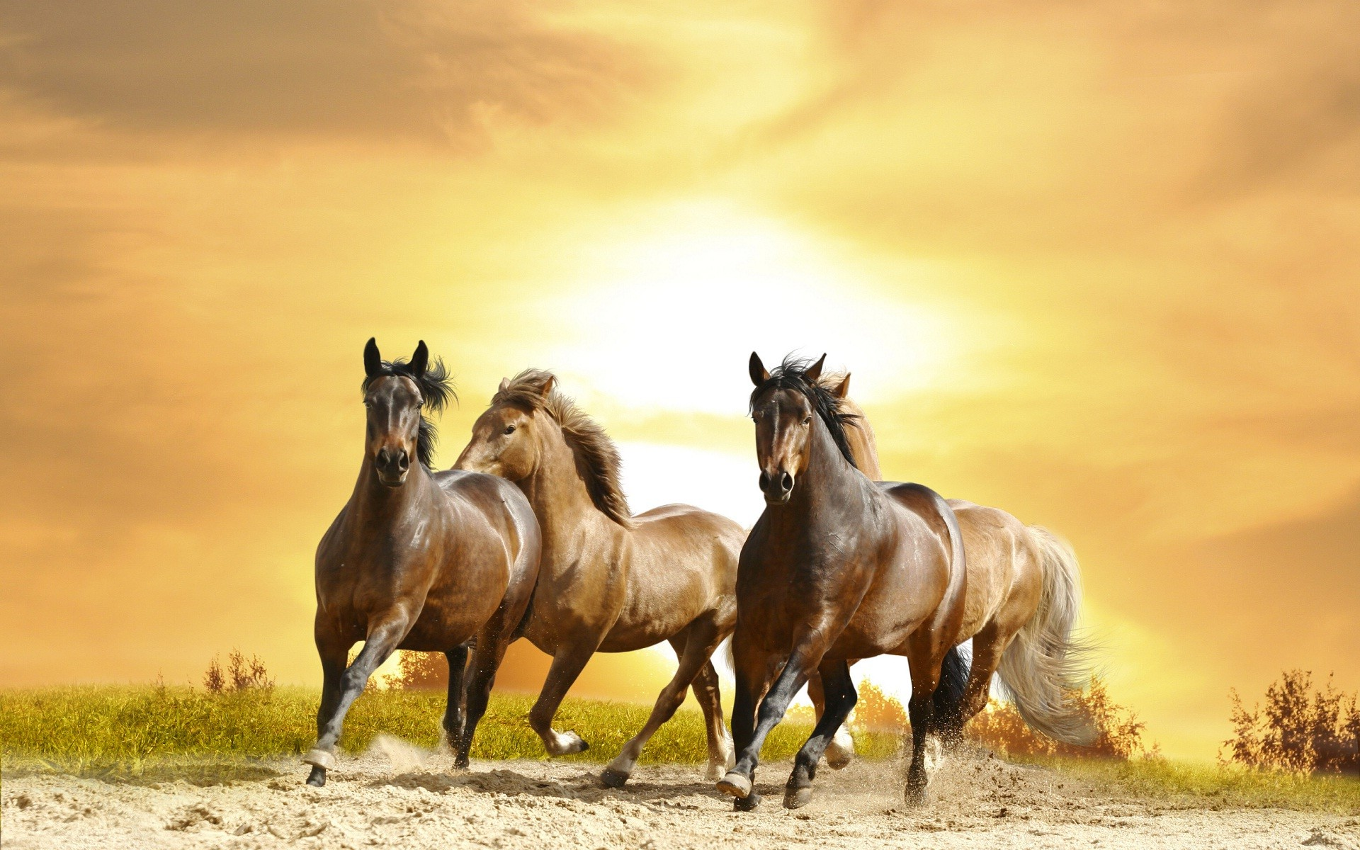Horse Wallpapers For Computer 58 Background Pictures