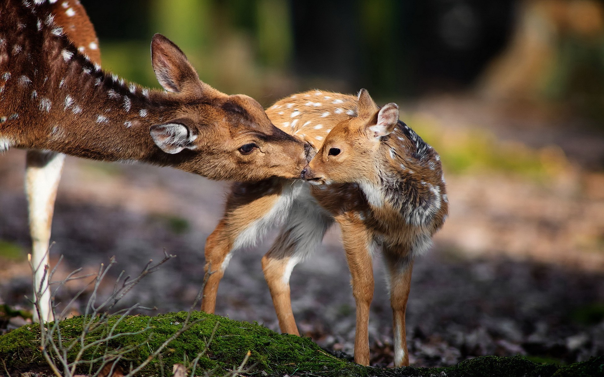 Baby Animals Wallpapers 65 Background Pictures