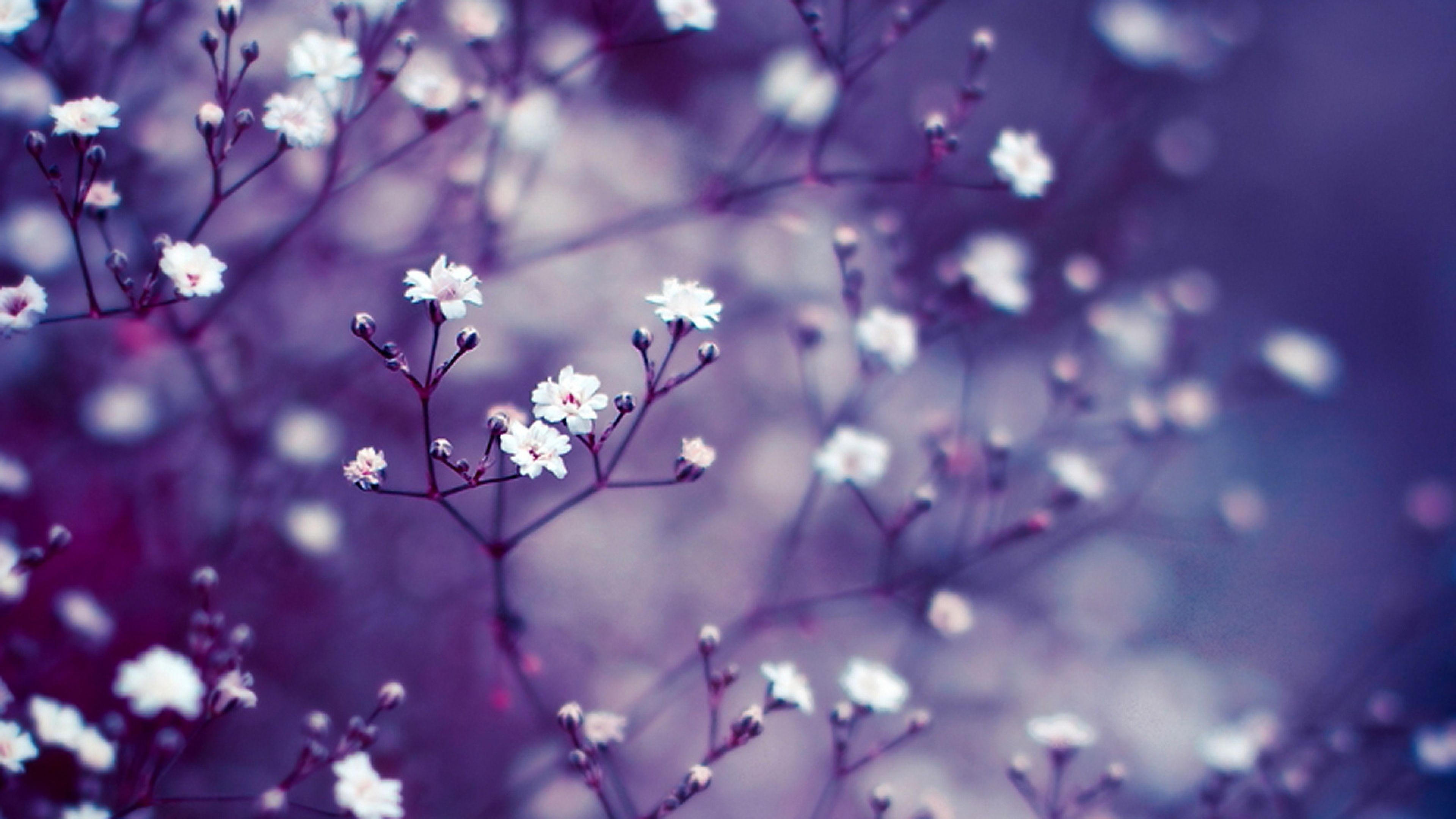 Floral Background Hd Images