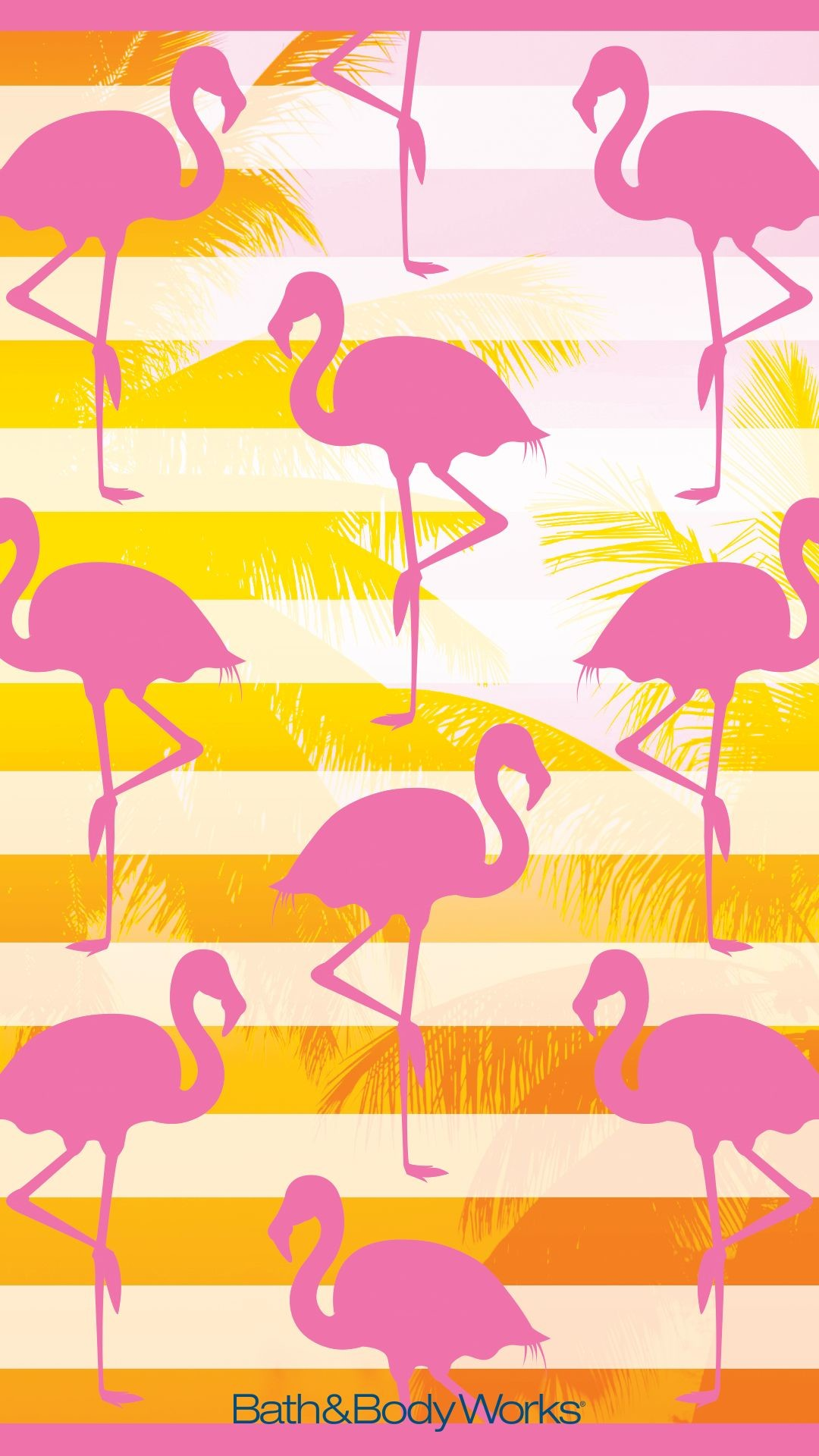 Flamingo Wallpapers 51 Background Pictures