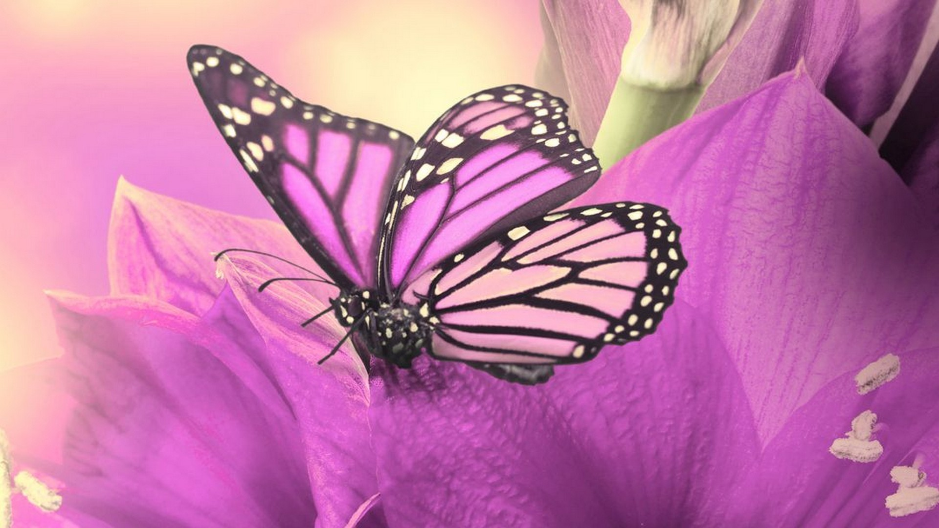 Cute Butterfly Wallpapers 74 Background Pictures