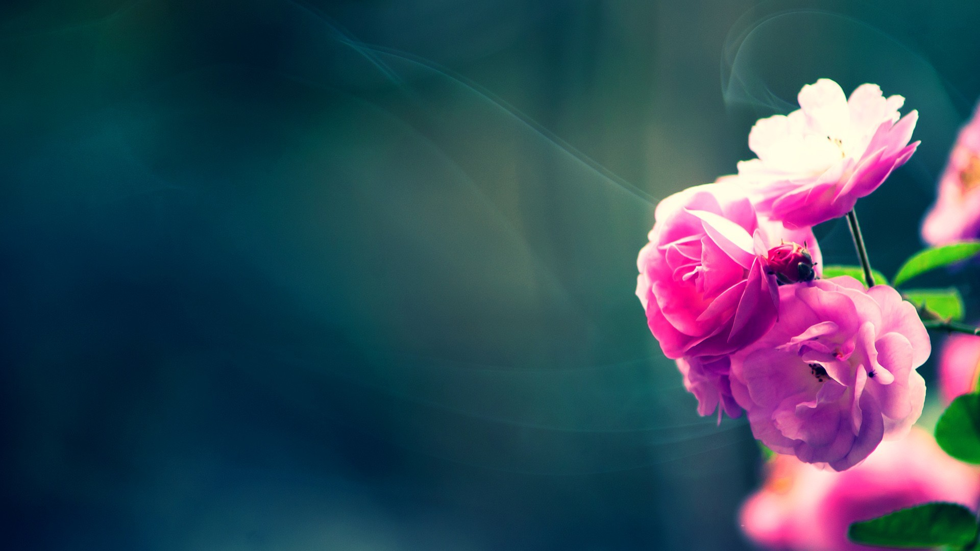 Hd Flower Wallpapers 70 Background Pictures