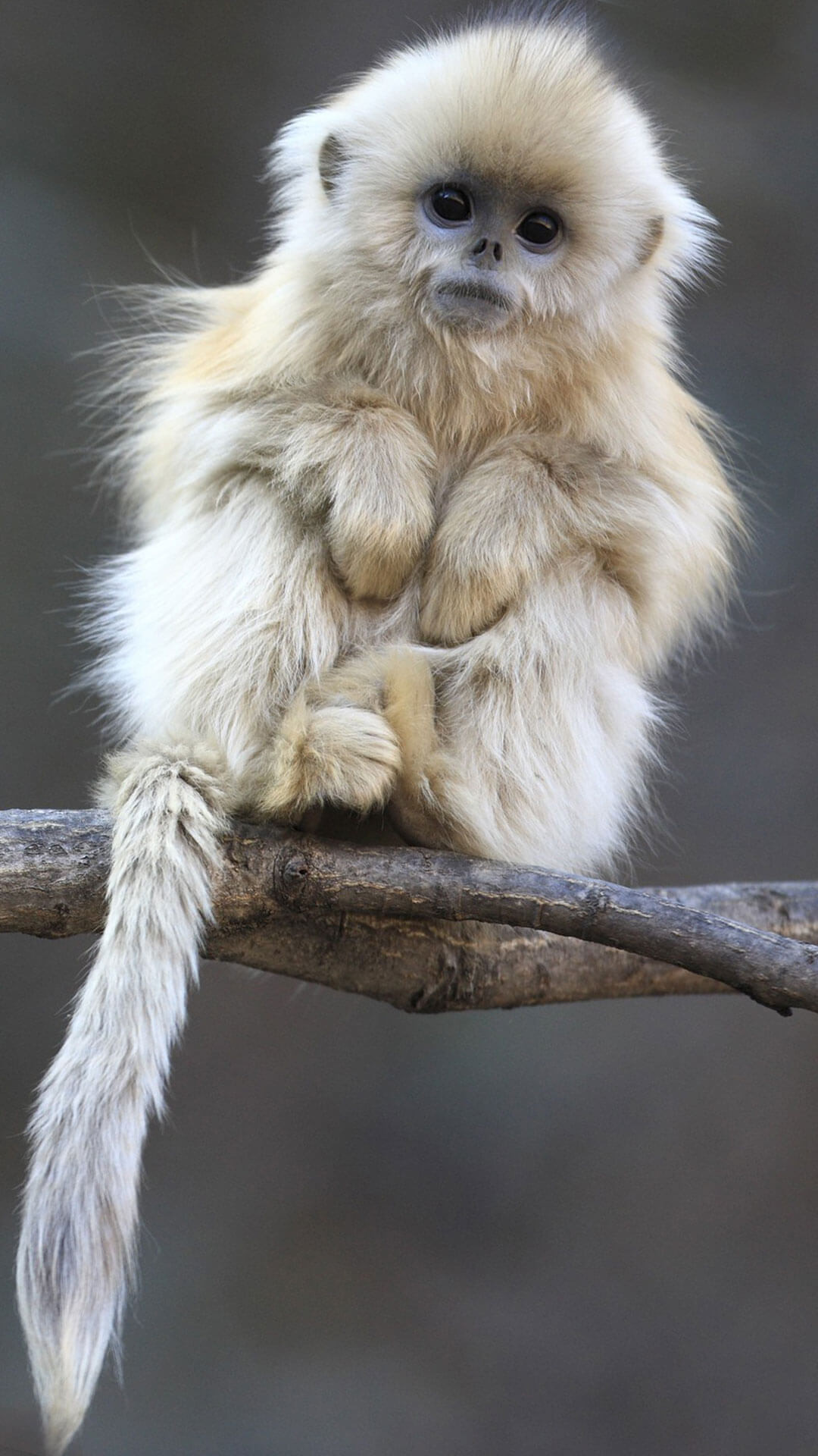 Cute Animal Wallpapers (65+ Background Pictures