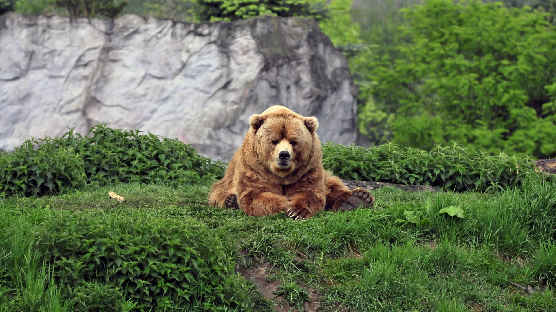 bear wallpapers 70 background pictures
