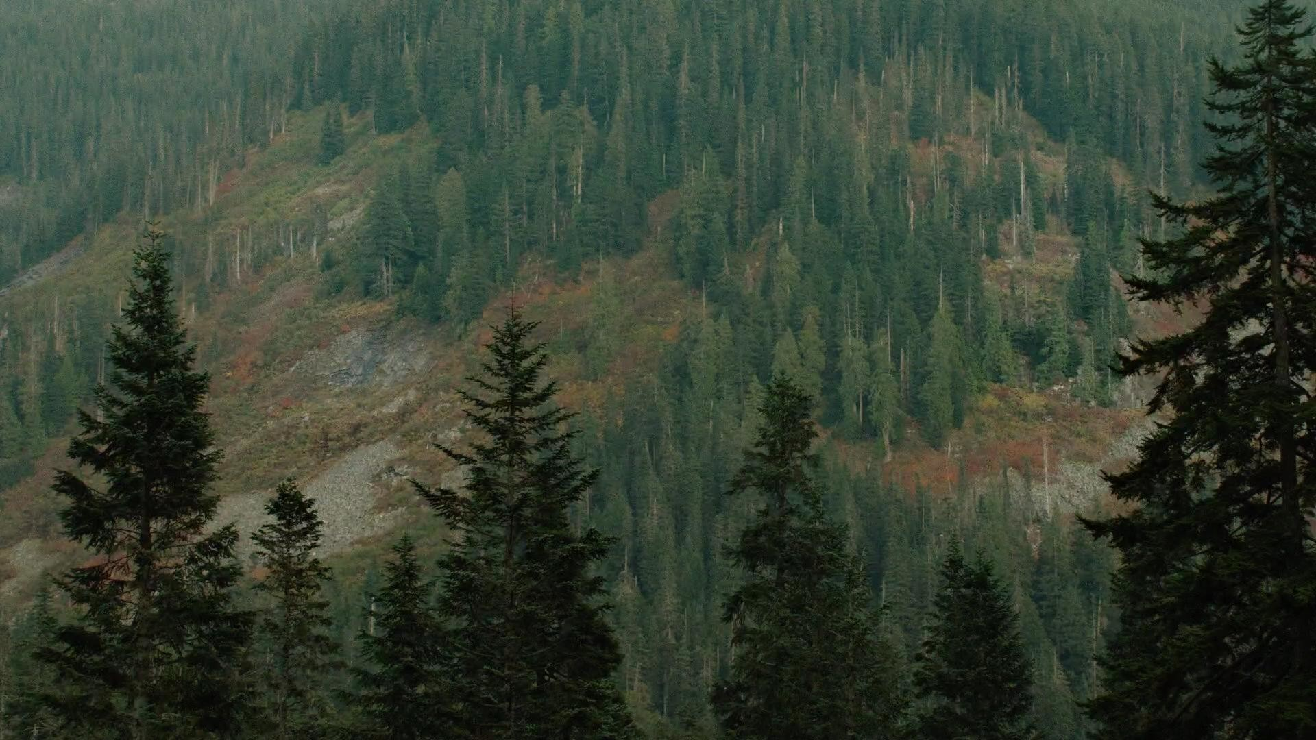 Twin Peaks Wallpapers 79 Background Pictures