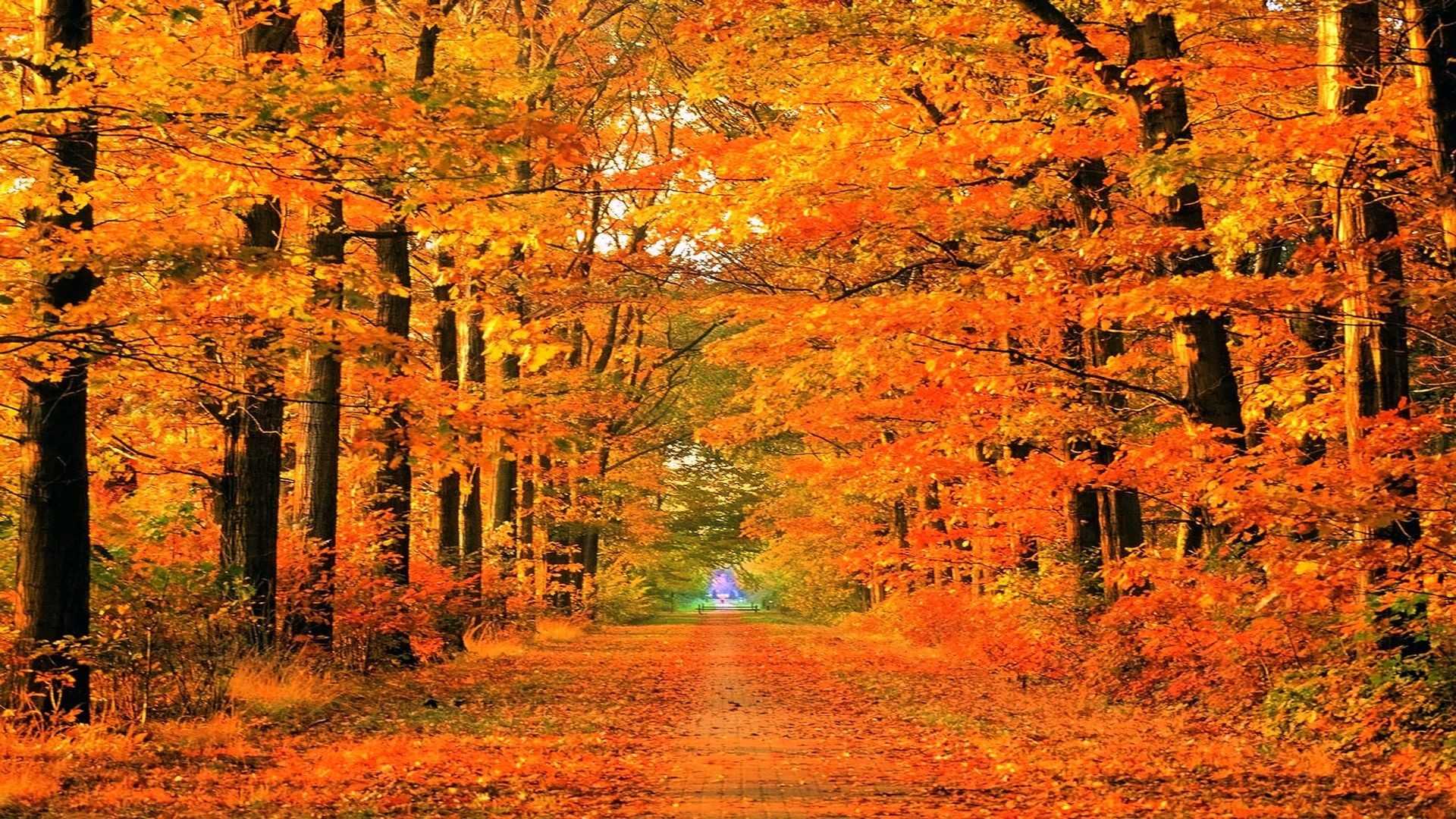 New England Fall Wallpapers 46 Background Pictures