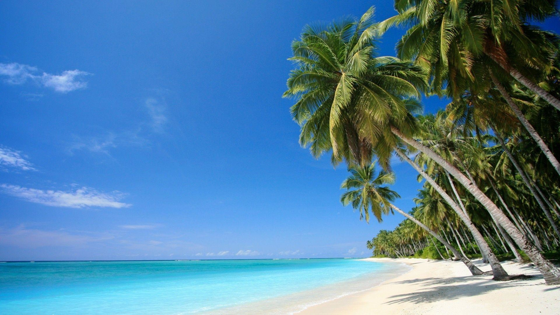 Caribbean Beach Wallpapers 72 Background Pictures