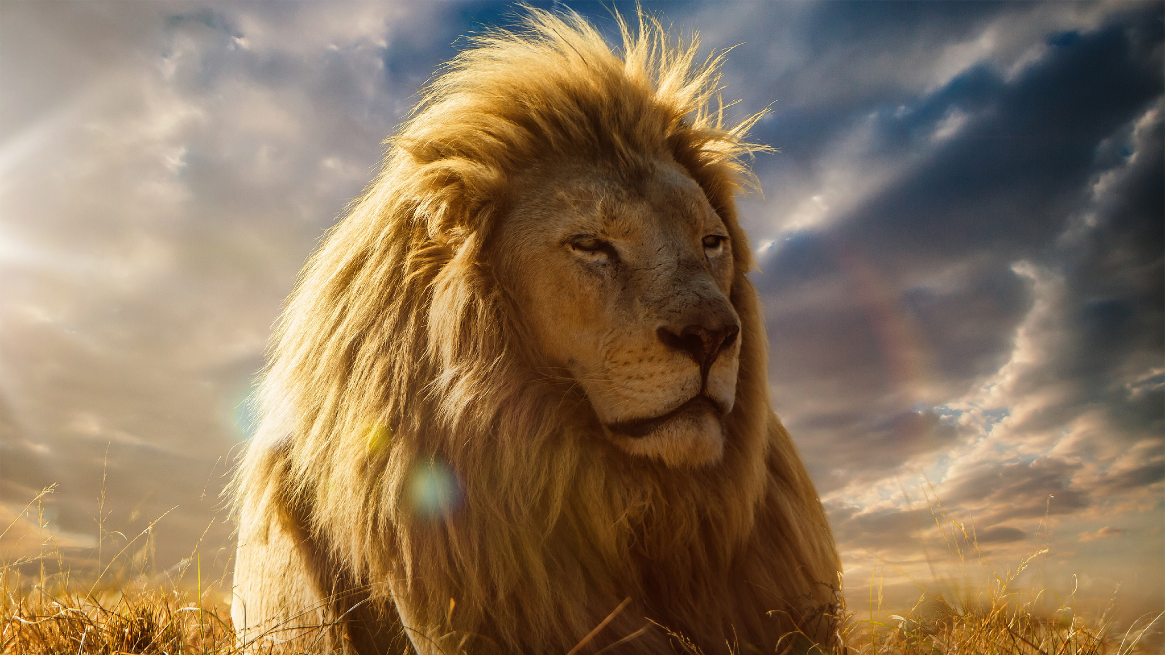 Lion Pictures Wallpapers 62 Background Pictures