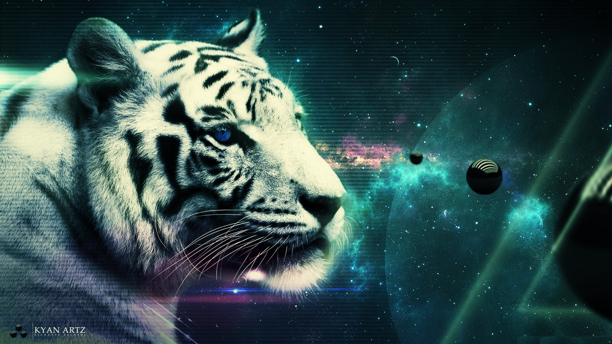 White Tiger Hd Wallpapers 70 Background Pictures