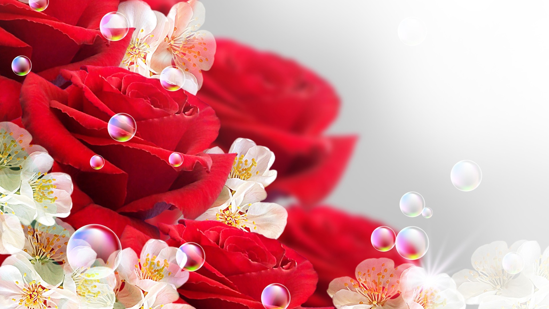 Beautiful Roses Wallpapers 62 Background Pictures