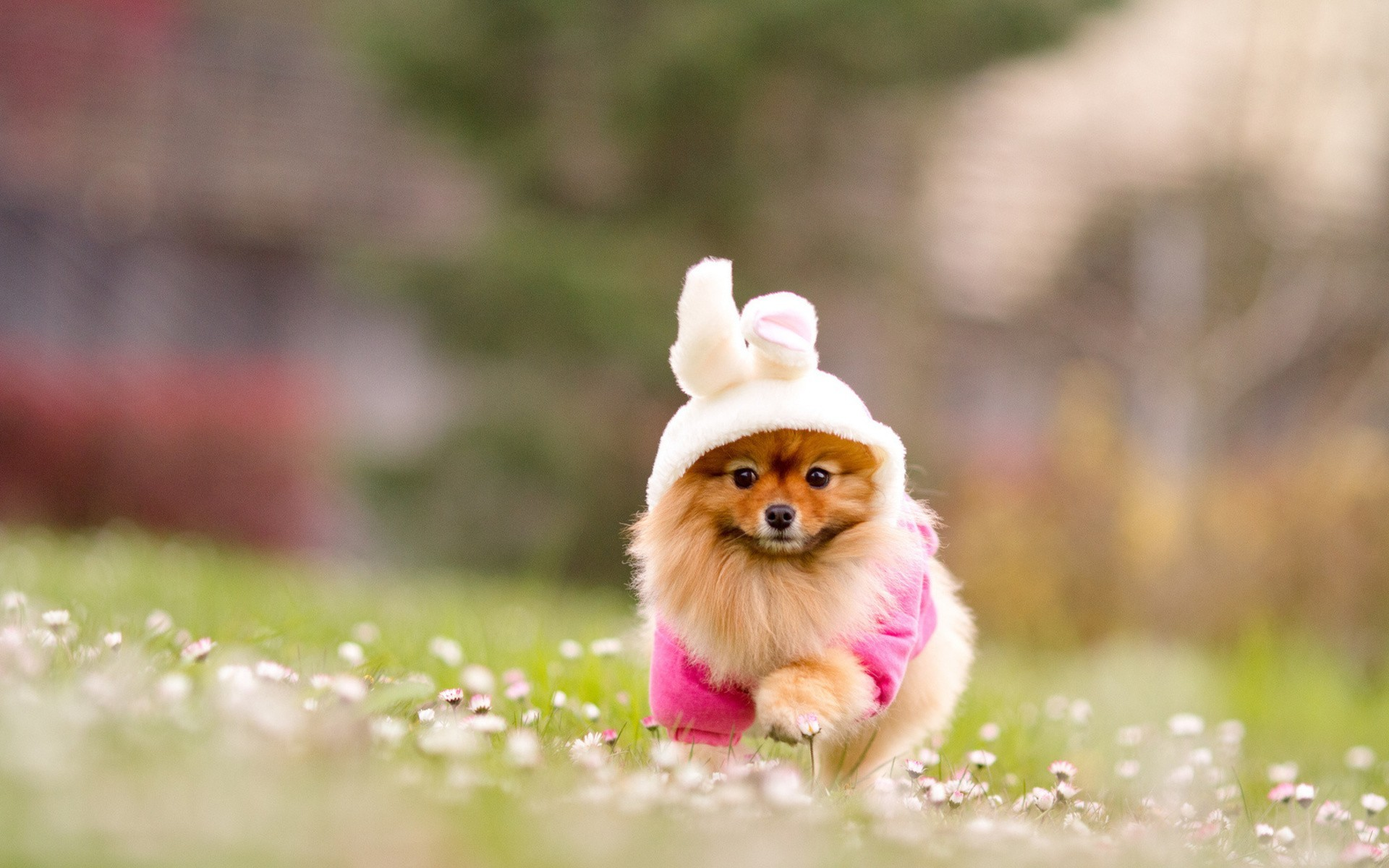 1970x1130 Rascal Cute Puppies Puppy Desktop Wallpapers Free Appealing For Style And Wallpaper