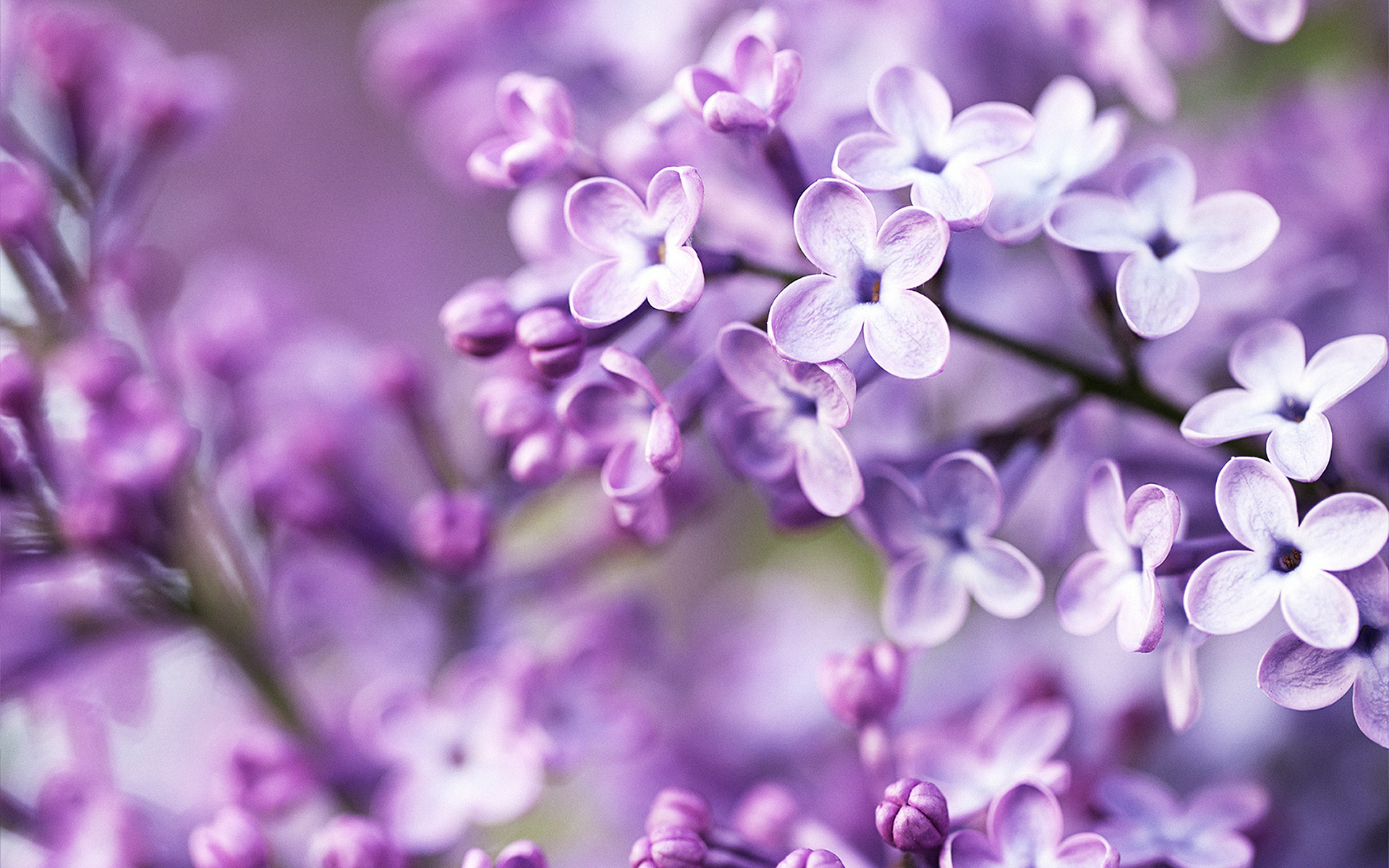 1920x1200 Spring Flowers Wallpapers High Quality