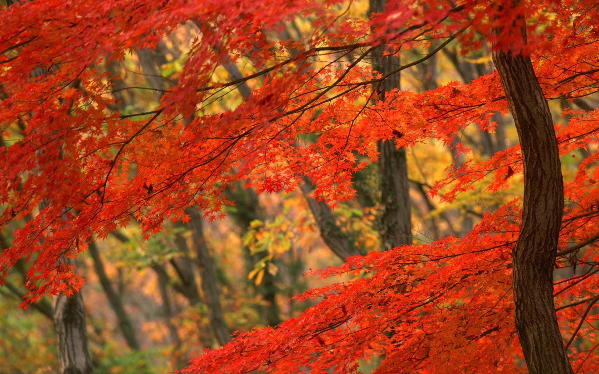 Beautiful Fall Pictures Wallpapers 63 Background Pictures