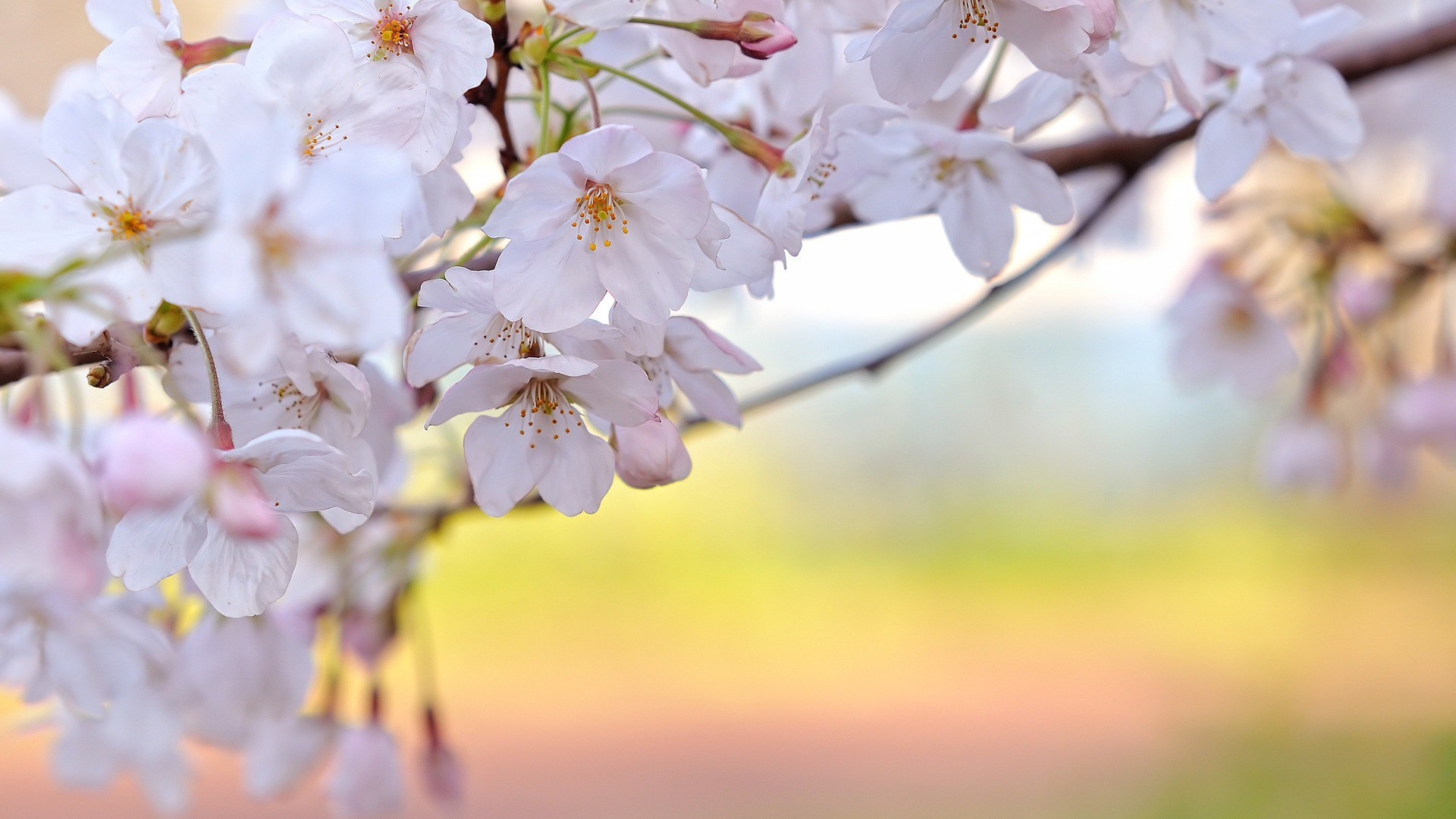 Spring Wallpapers Hd 85 Background Pictures