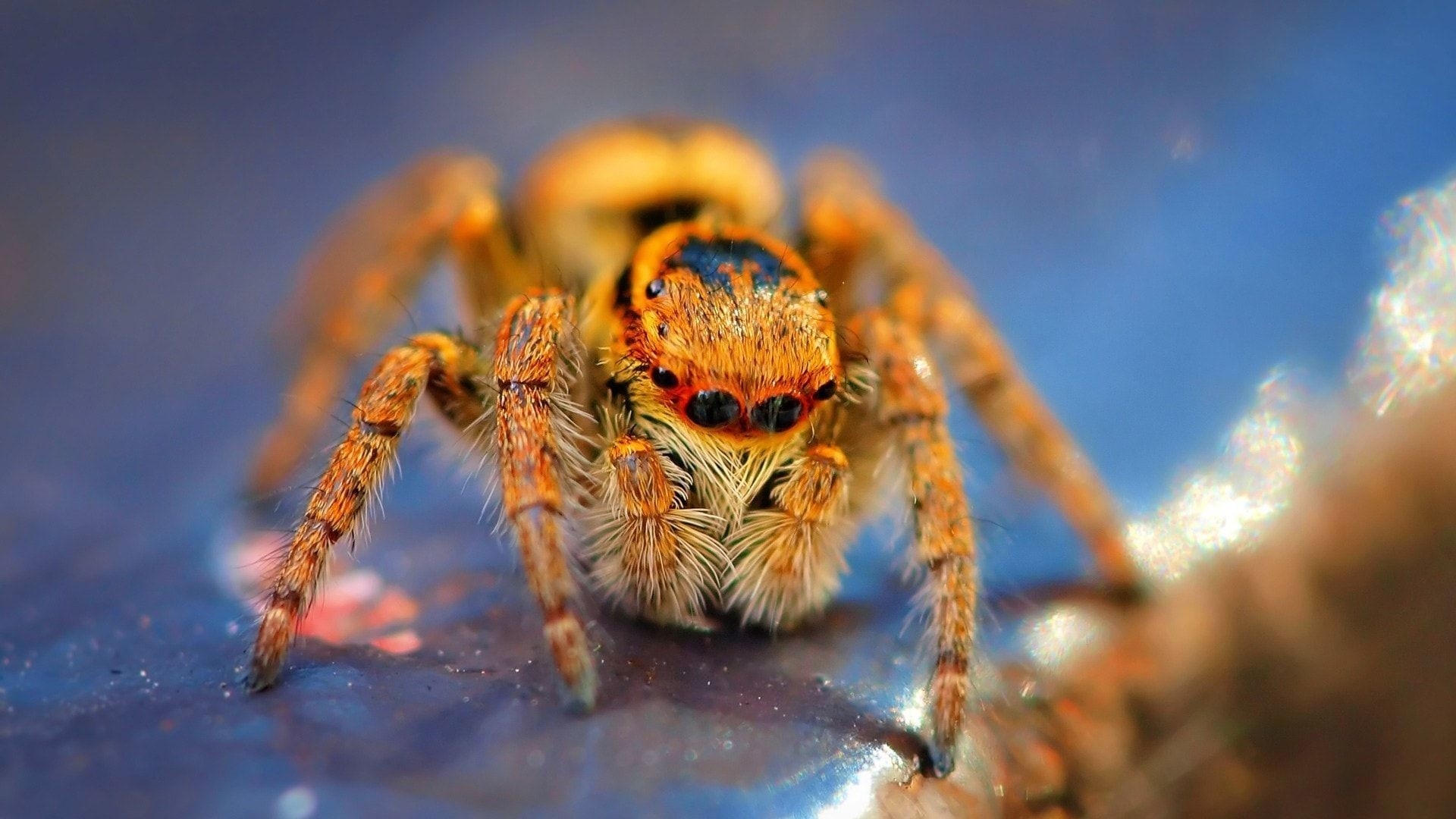 spider wallpapers (59+ background pictures)