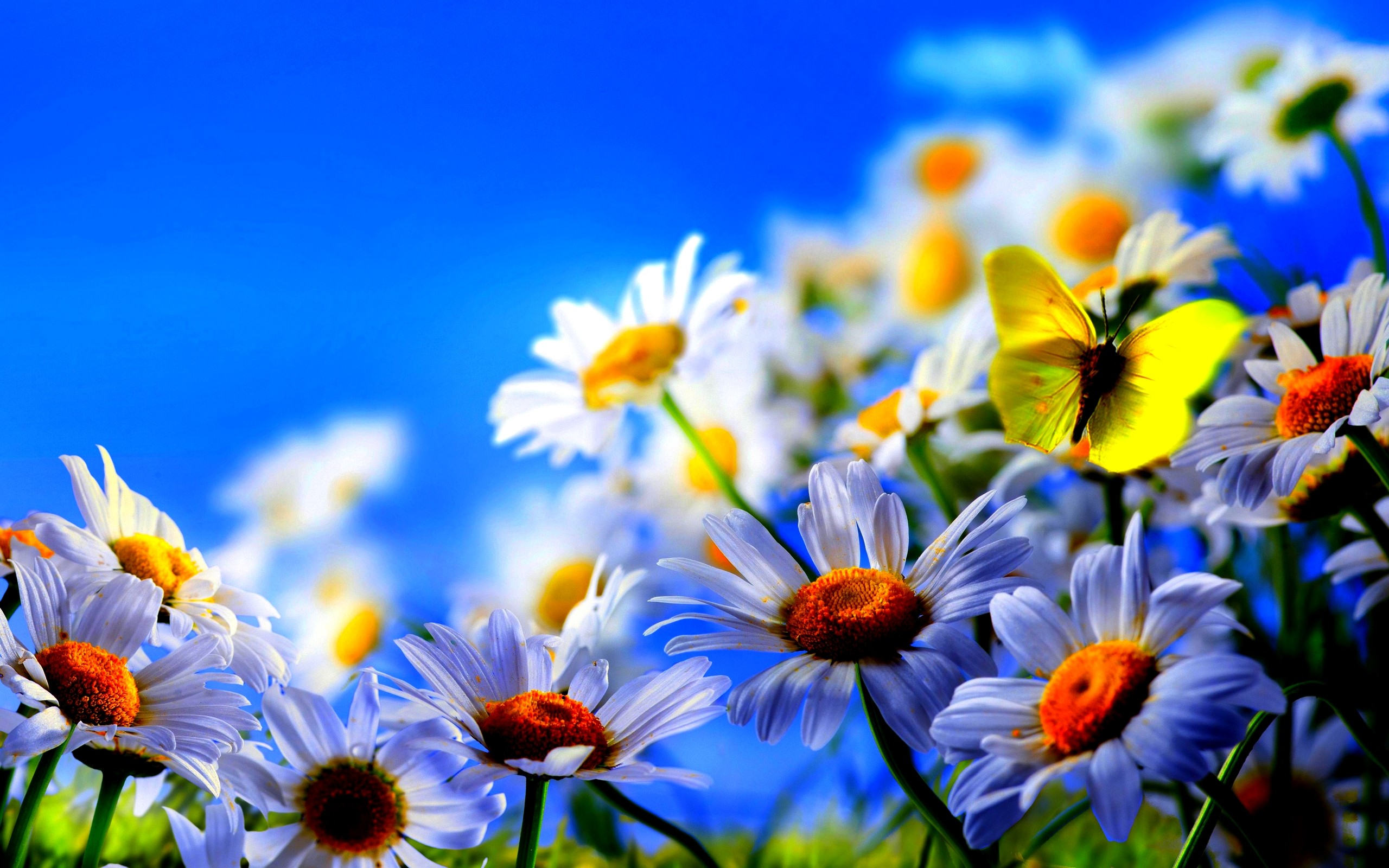 spring hd wallpapers (71+ background pictures)