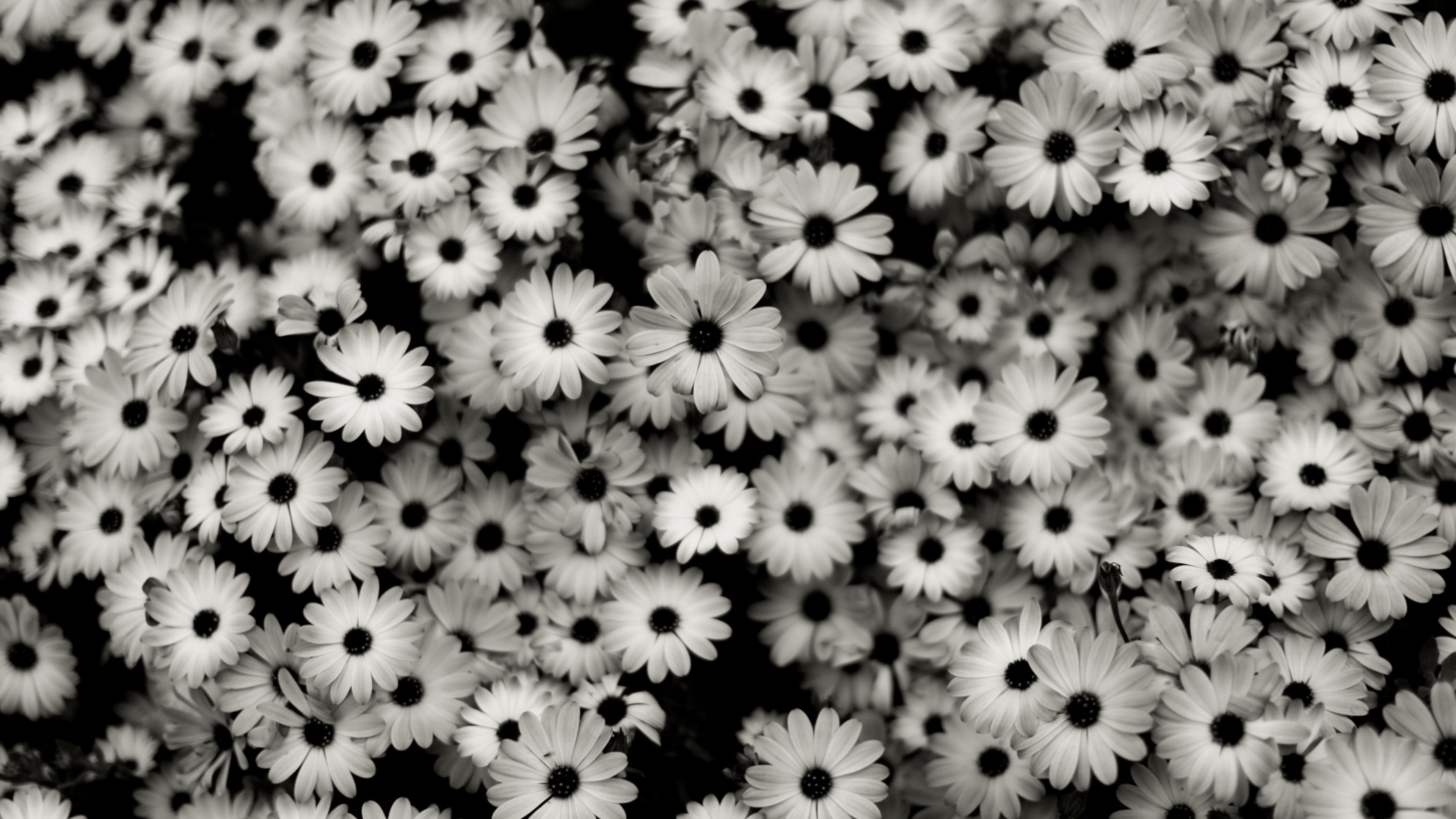Black And White Wallpapers Desktop 71 Background Pictures