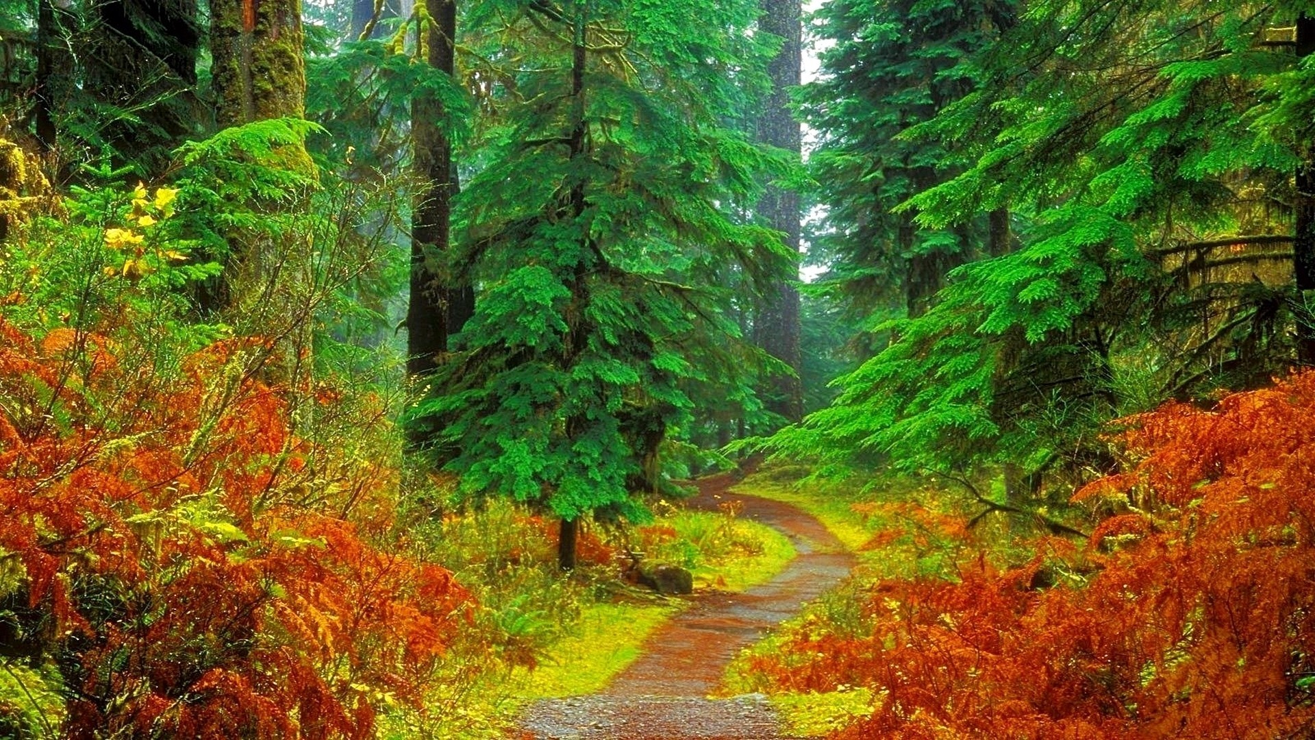 Hd Forest Wallpapers 77 Background Pictures