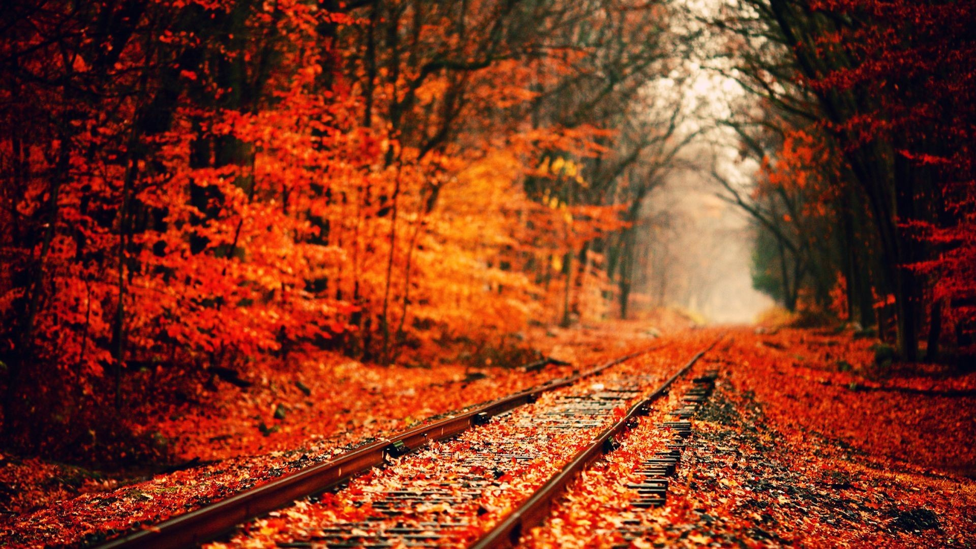 Desktop Wallpapers Fall 69 Background Pictures