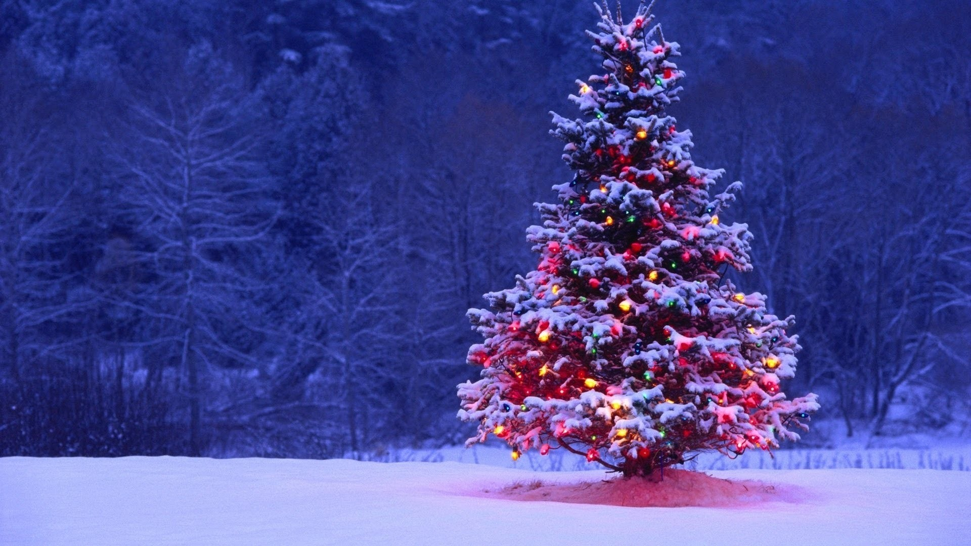 1920x1080 Christmas Tree Wallpapers Background
