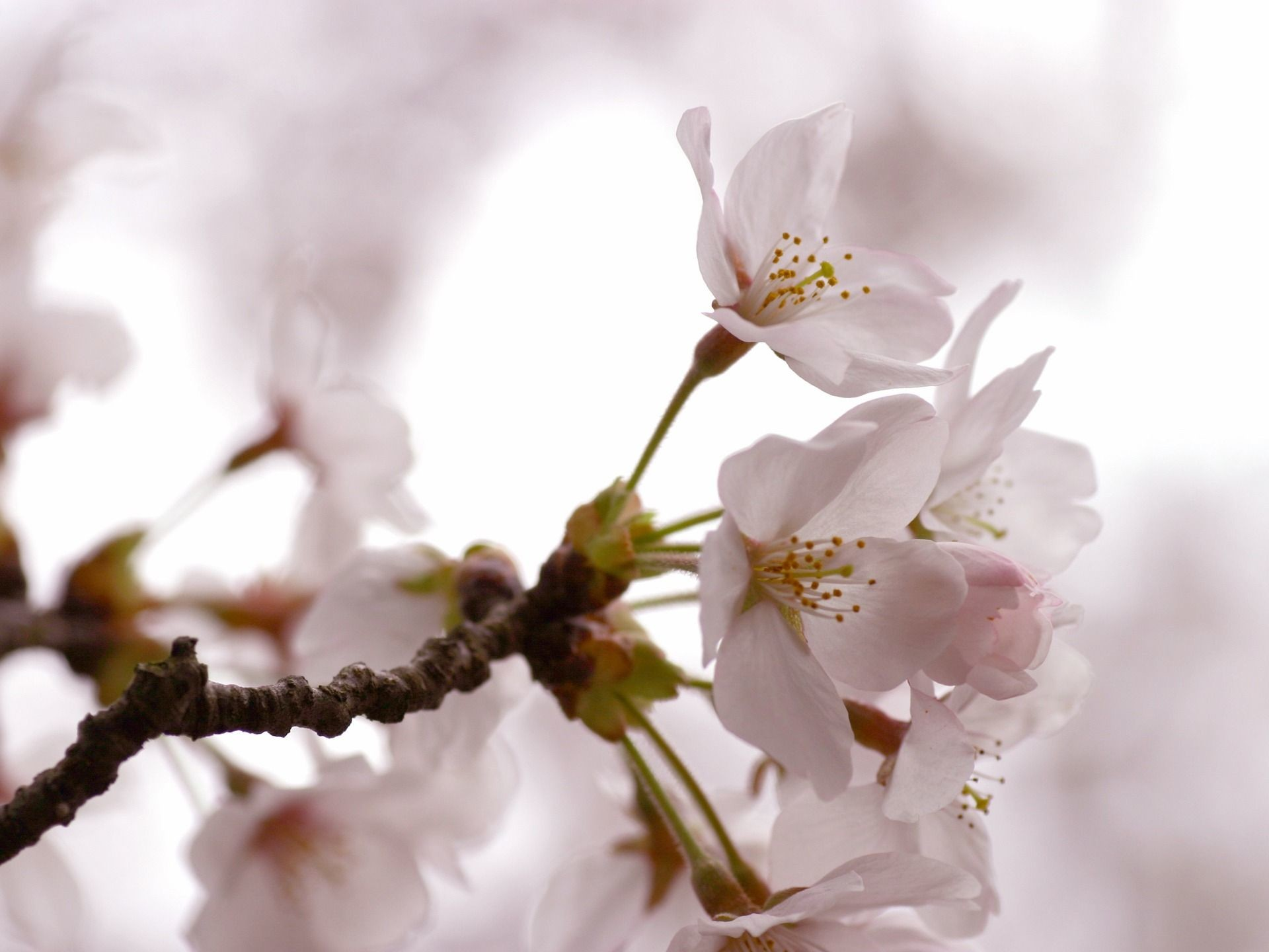 Spring Flower Wallpapers Backgrounds 69 Background Pictures