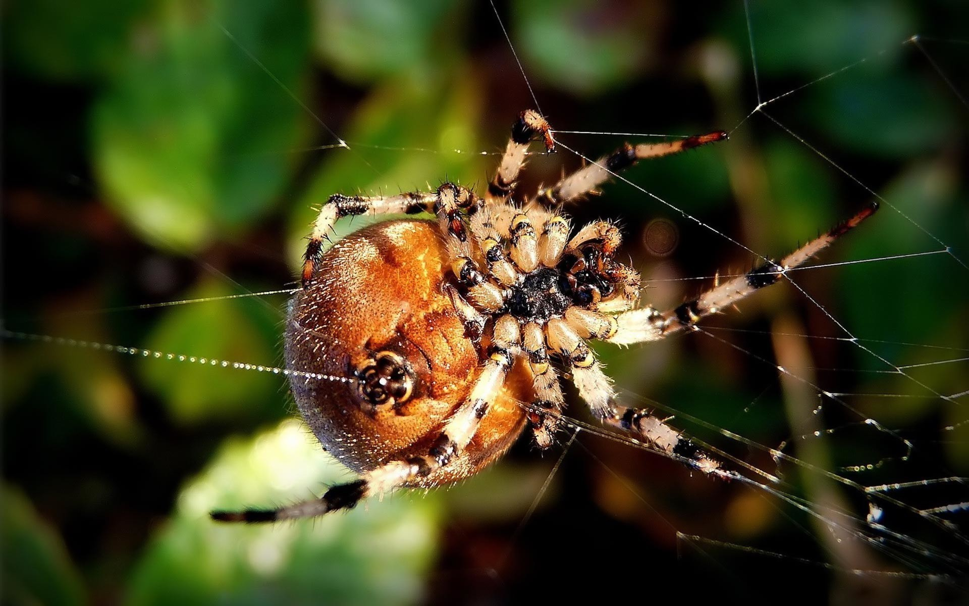 spiders wallpapers (61+ background pictures)