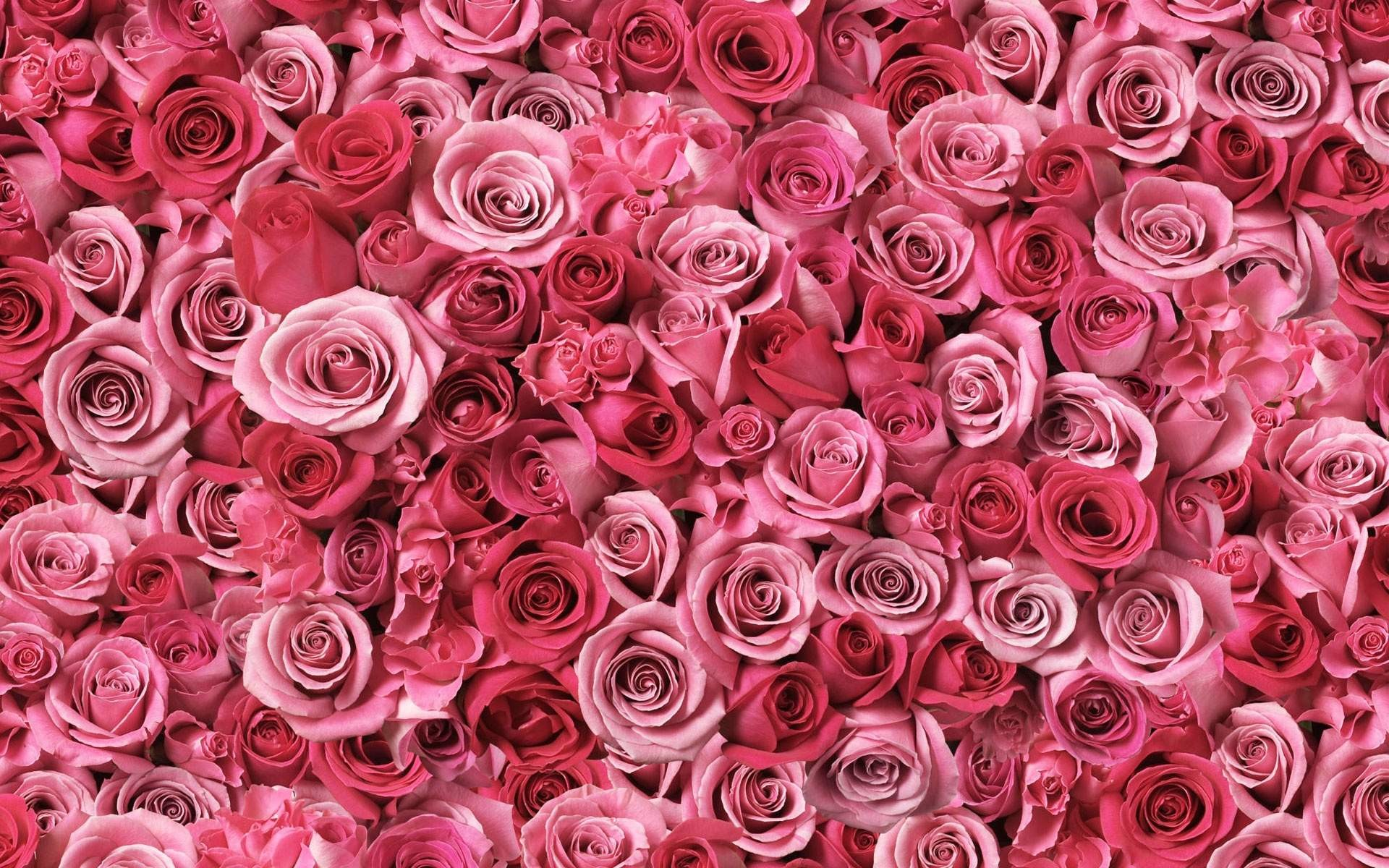 Pink Flower Wallpapers 74 Background Pictures