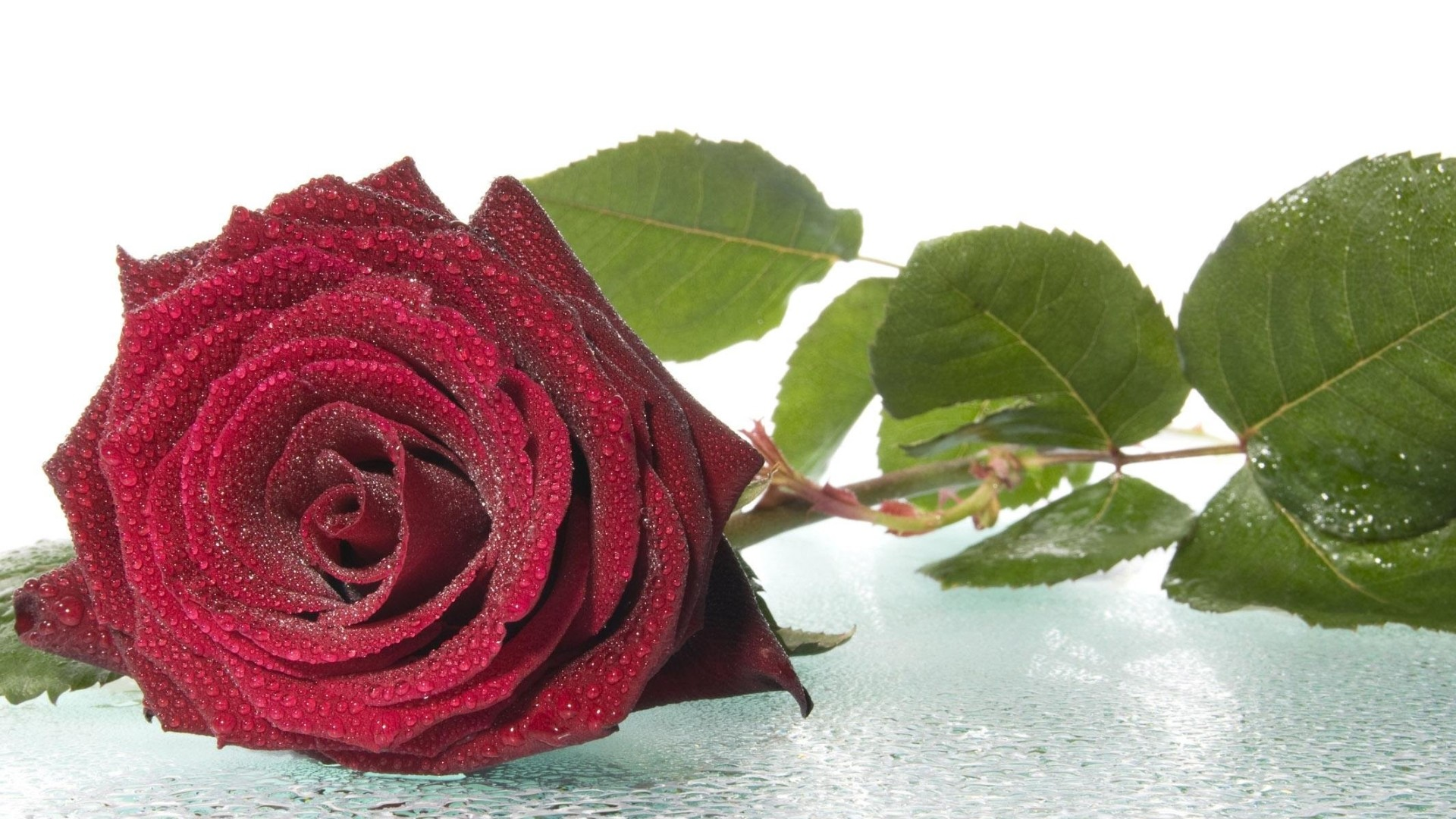Red Roses Wallpapers For Desktop 63 Background Pictures