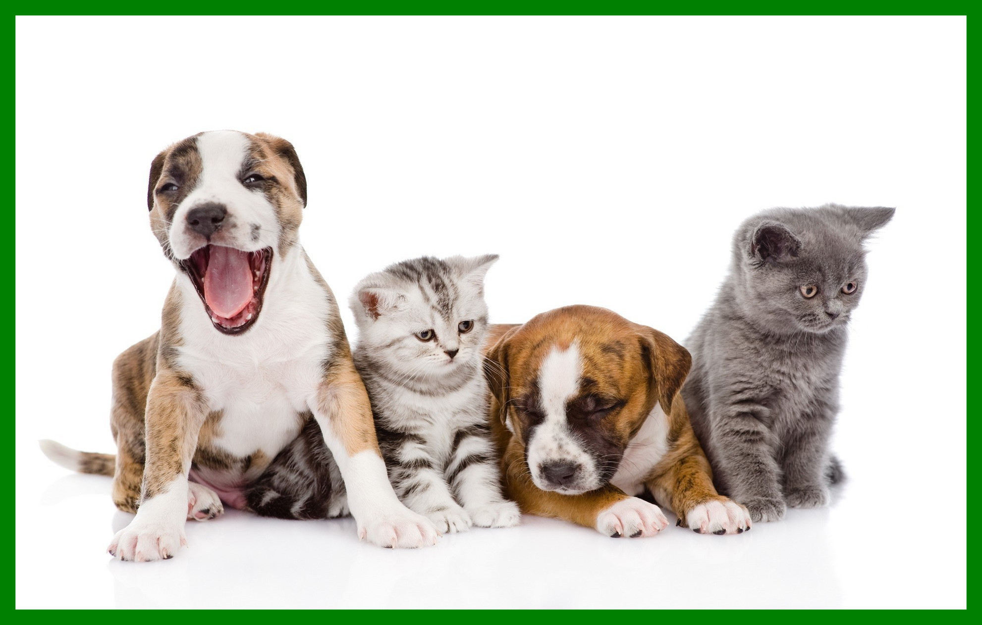 2560x1600 20 Cats And Dogs Wallpapers