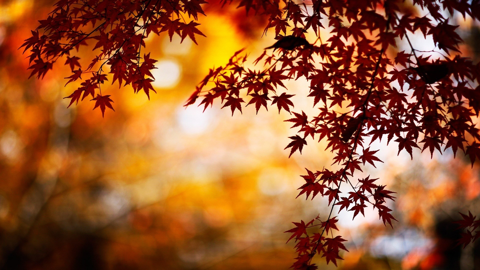 Fall Wallpapers For Computer 72 Background Pictures