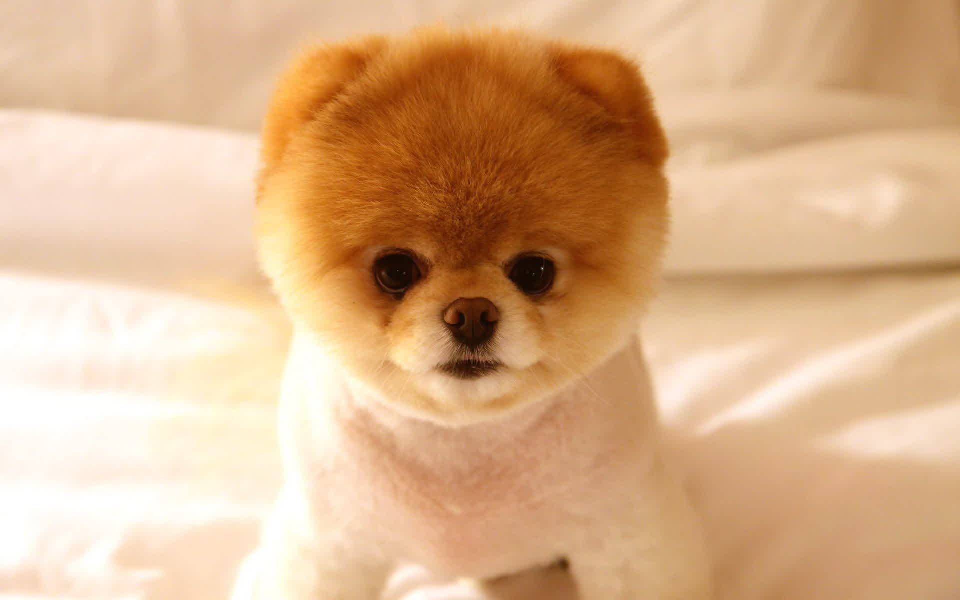 Cute Dogs And Puppies Wallpapers 65 Background Pictures