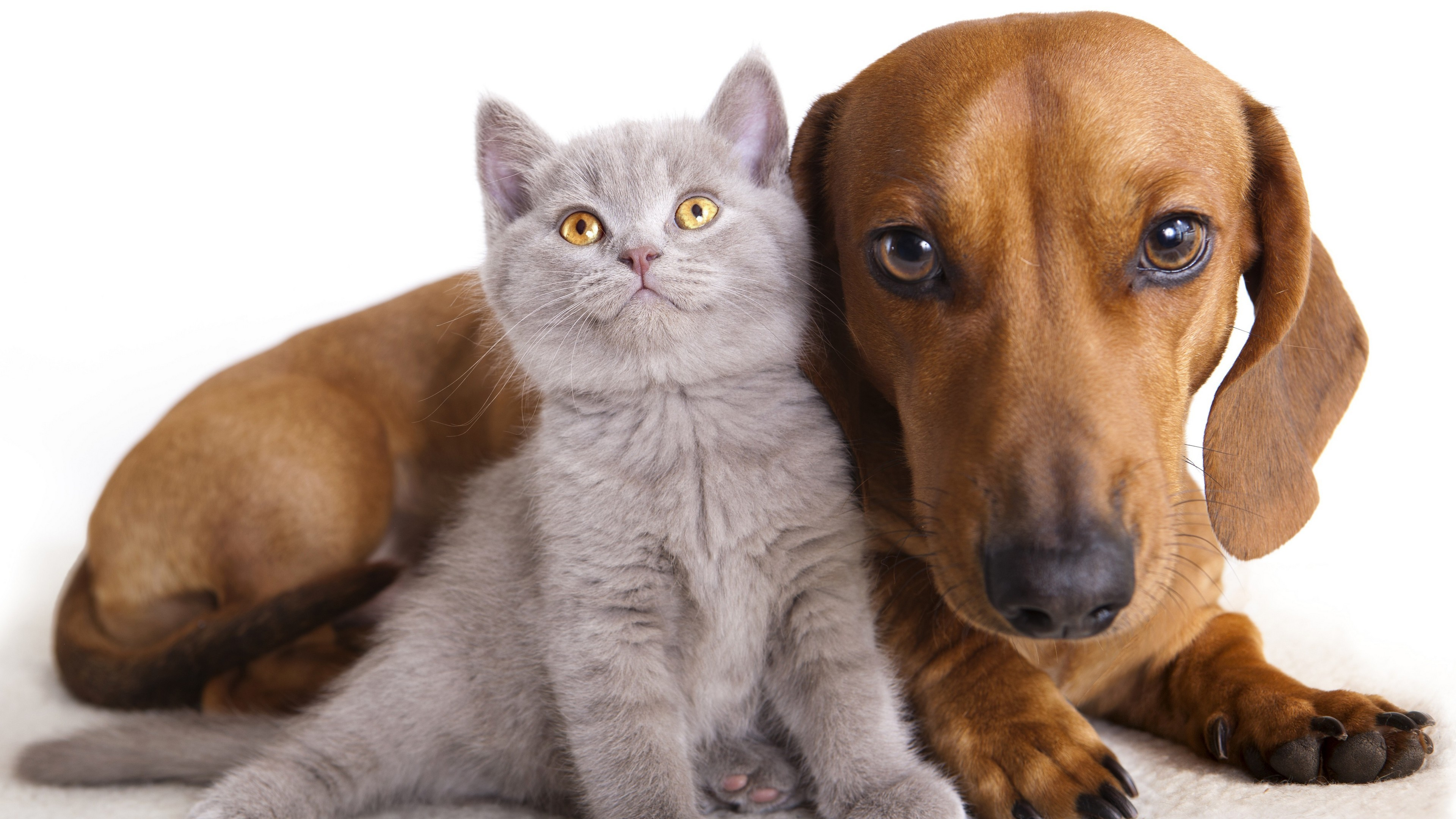 2400x1800 Cat Dog Wallpapers 15