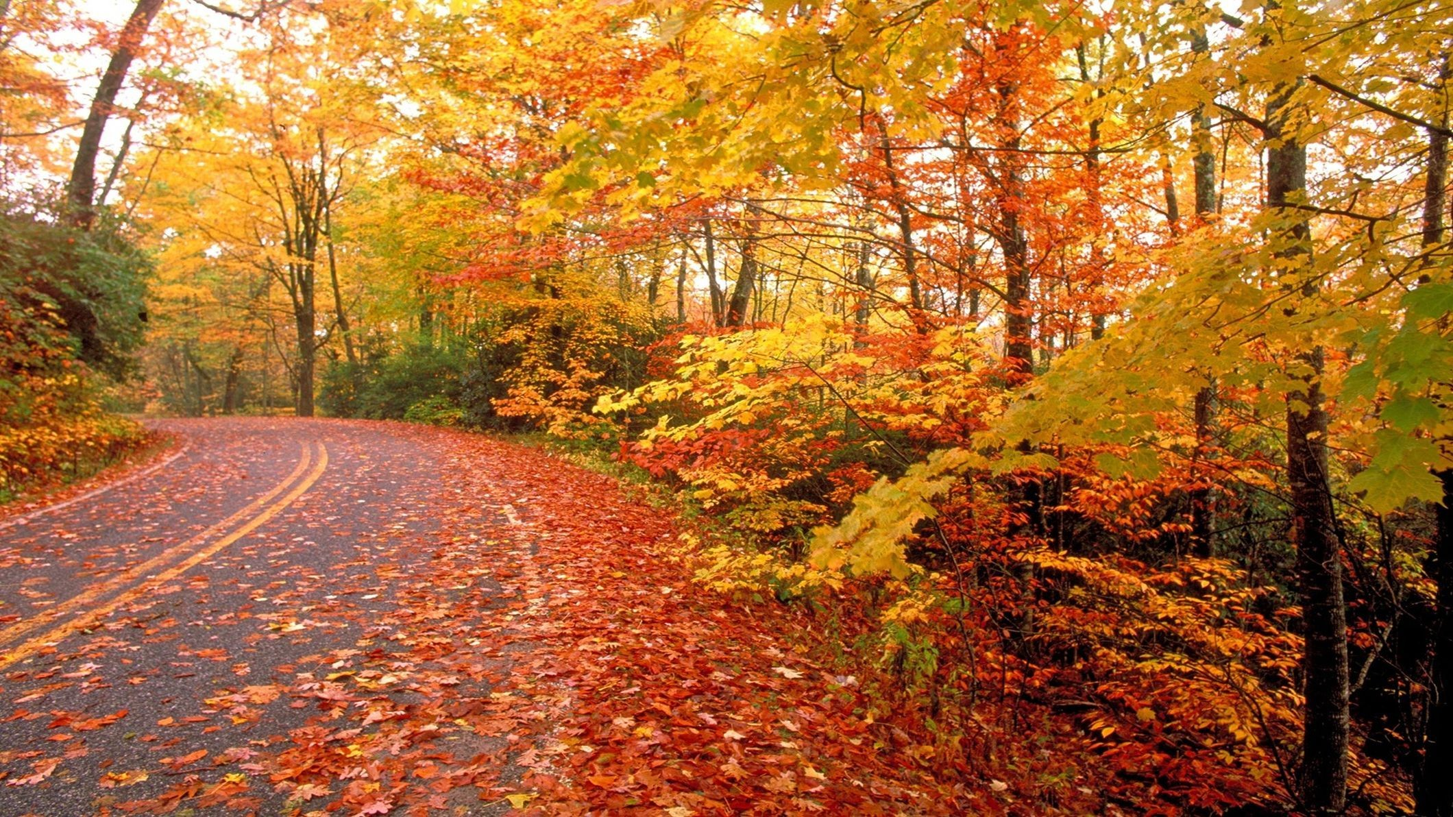 Fall Wallpapers Hd 81 Background Pictures