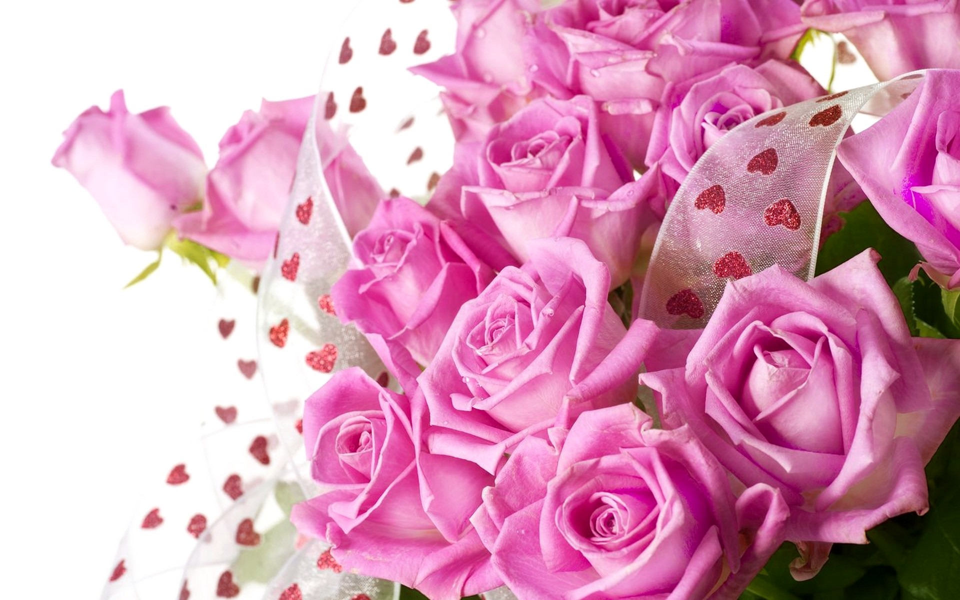 Beautiful roses wallpapers 62 background pictures 2560x1600 red beauty pink bright nature roses lovely beautiful tulips flowers rose wallpapers in full hd 2560x1600 izmirmasajfo