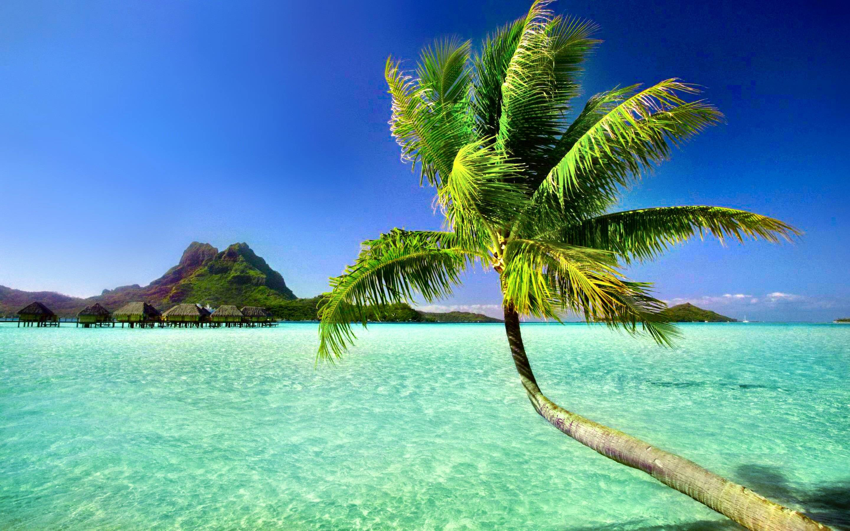 palm tree beach wallpapers 72 background pictures