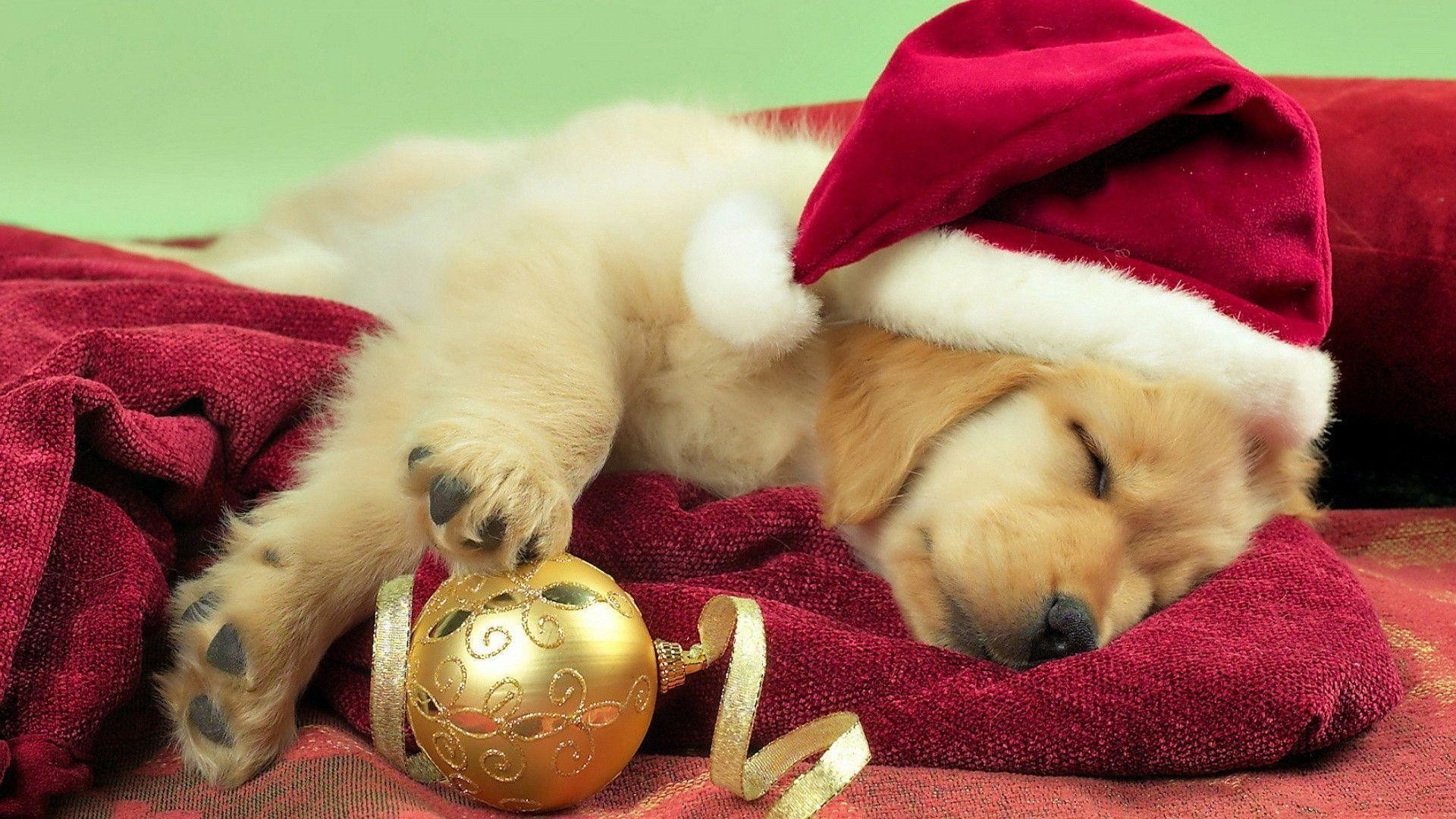 2000x1333 Cute Puppies Wallpapers Free Download 187241