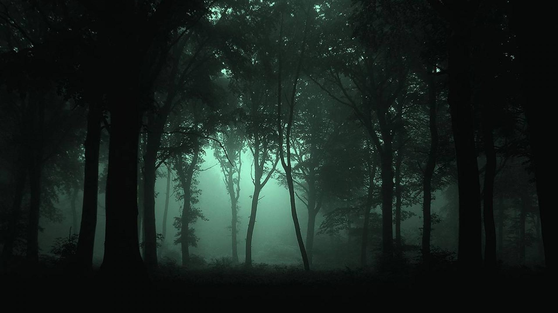 1920x1080 Dark Forest Wallpapers High Resolution Background 1 HD Wallpapers .