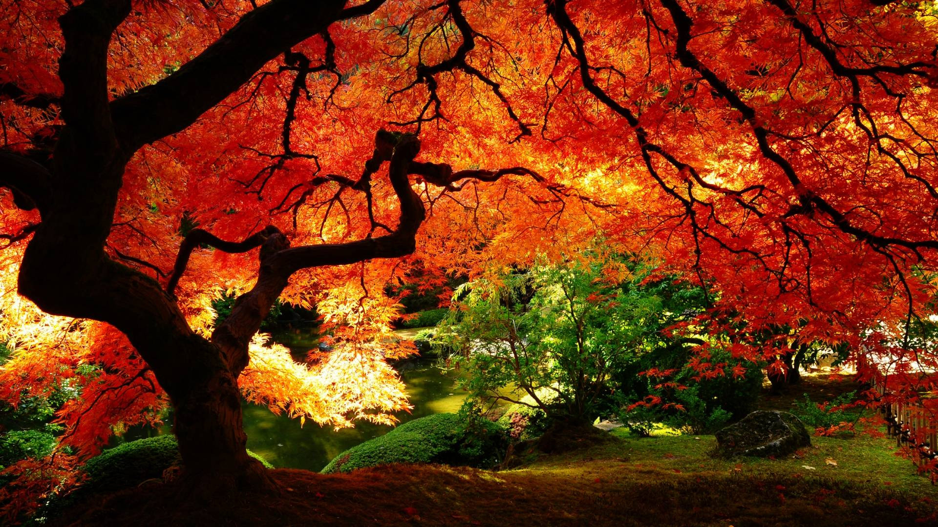 fall desktop wallpapers 71 background pictures