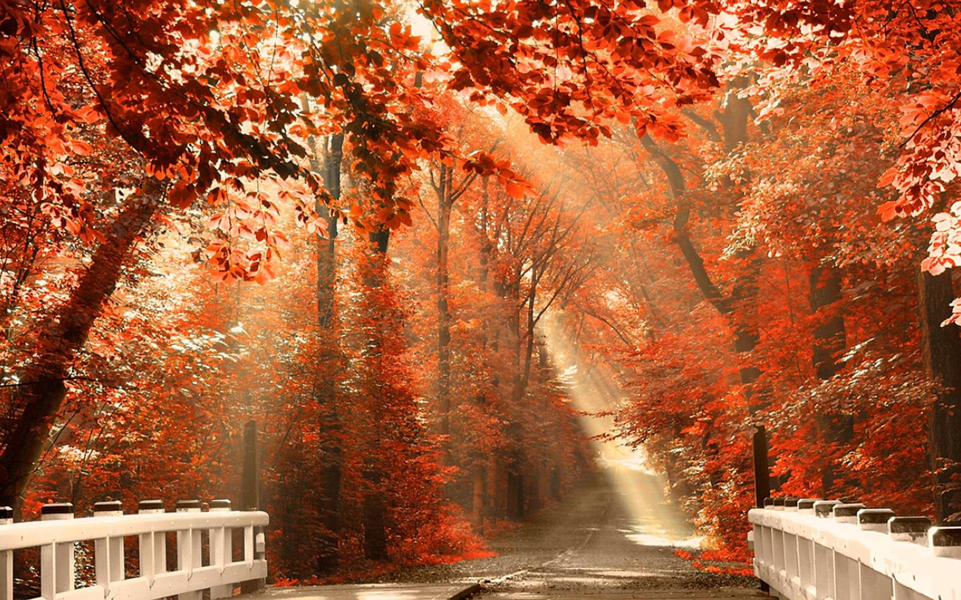 fall wallpapers pictures 71 background pictures