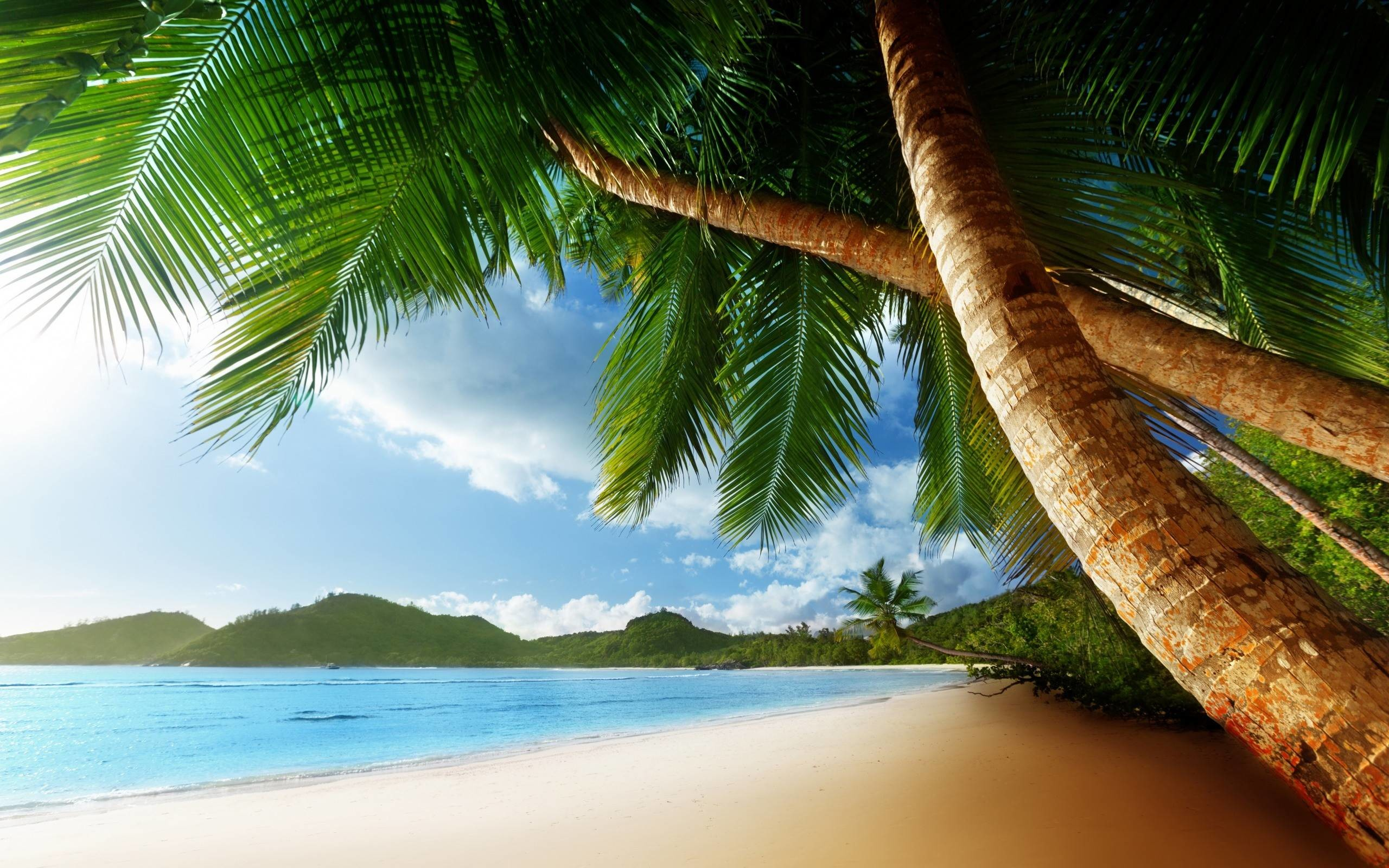 palm tree beach wallpapers (72+ background pictures)