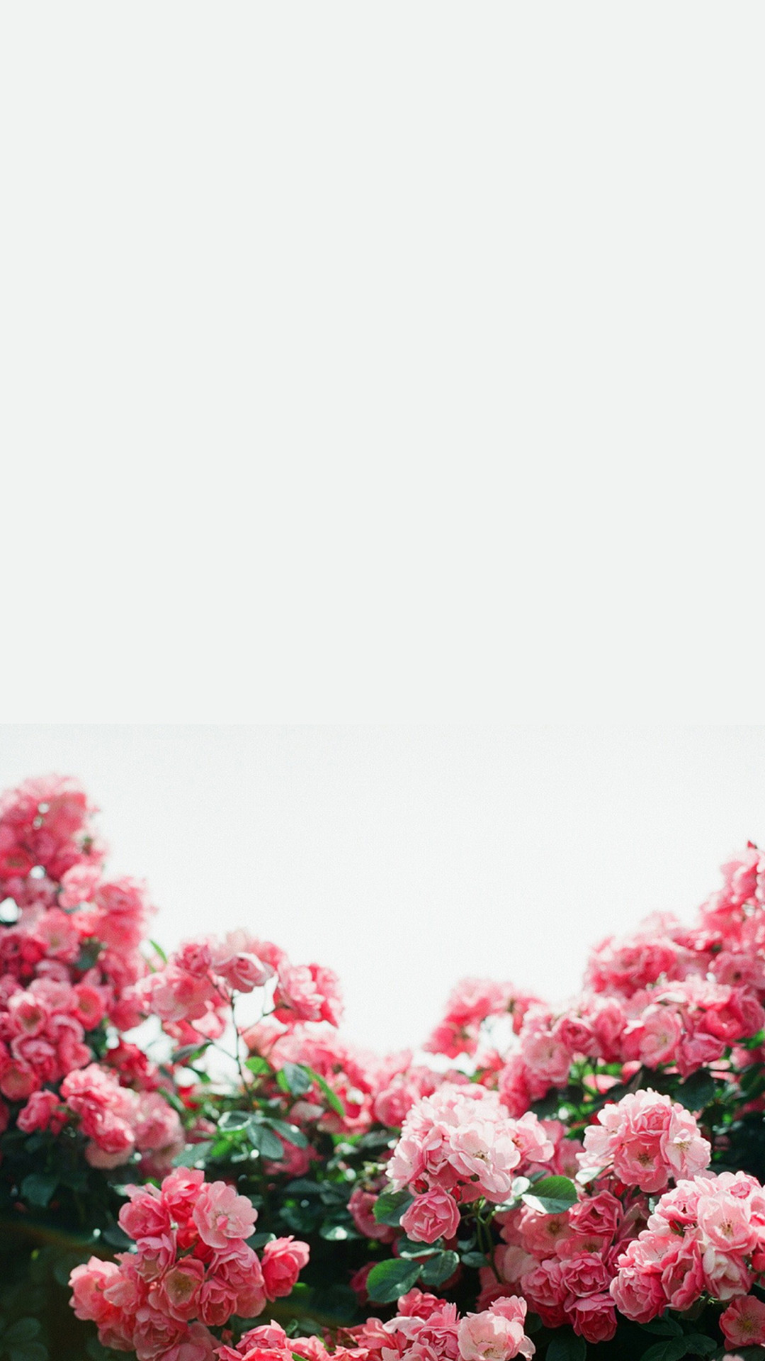 Iphone Wallpapers Tumblr (87+ background pictures)