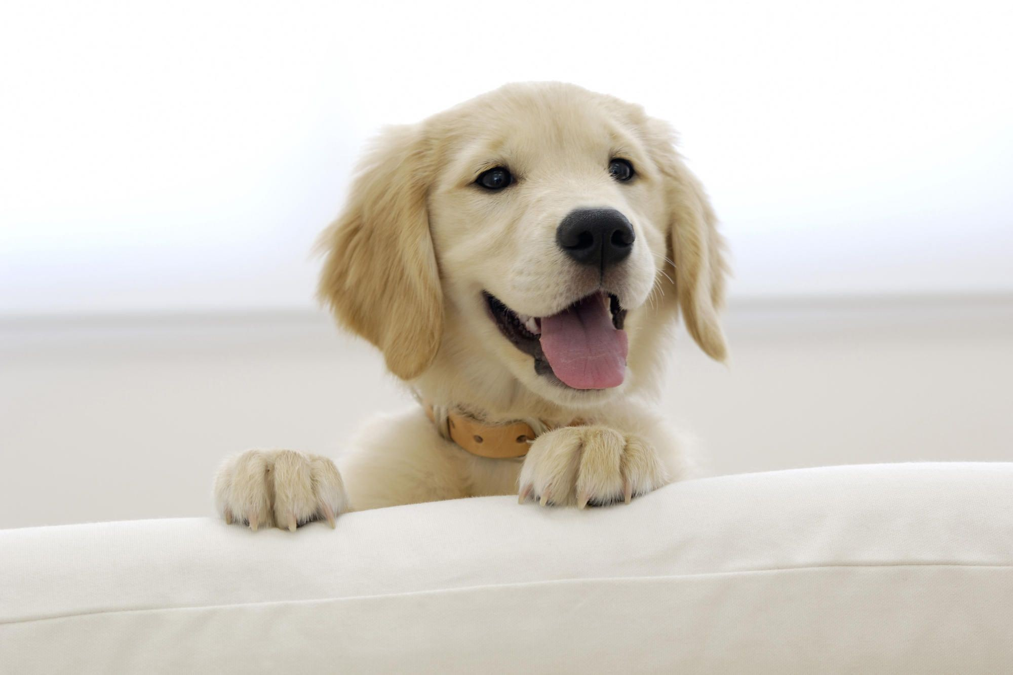 Puppies Wallpapers 73 Background Pictures
