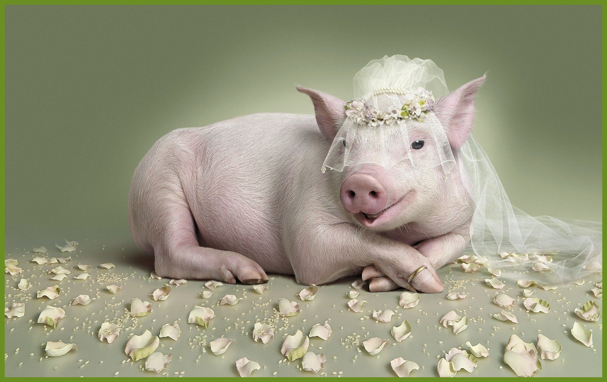 cute pig wallpapers 66 background pictures