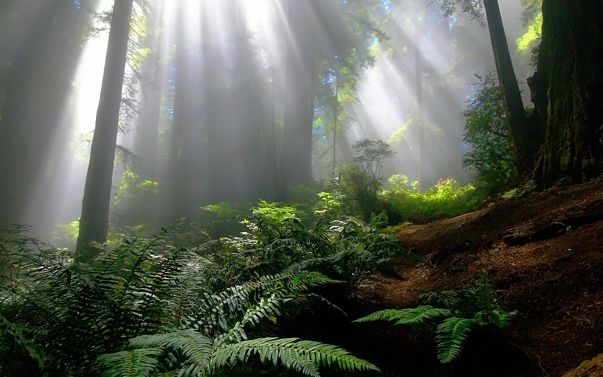 Forest Wallpapers Hd 73 Background Pictures