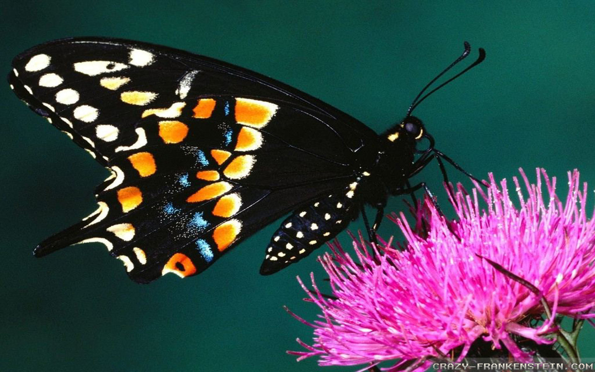 1920x1200 2160x1920 Wallpaper Butterflies Neon Light Abstract Black Background Hd Picture Image