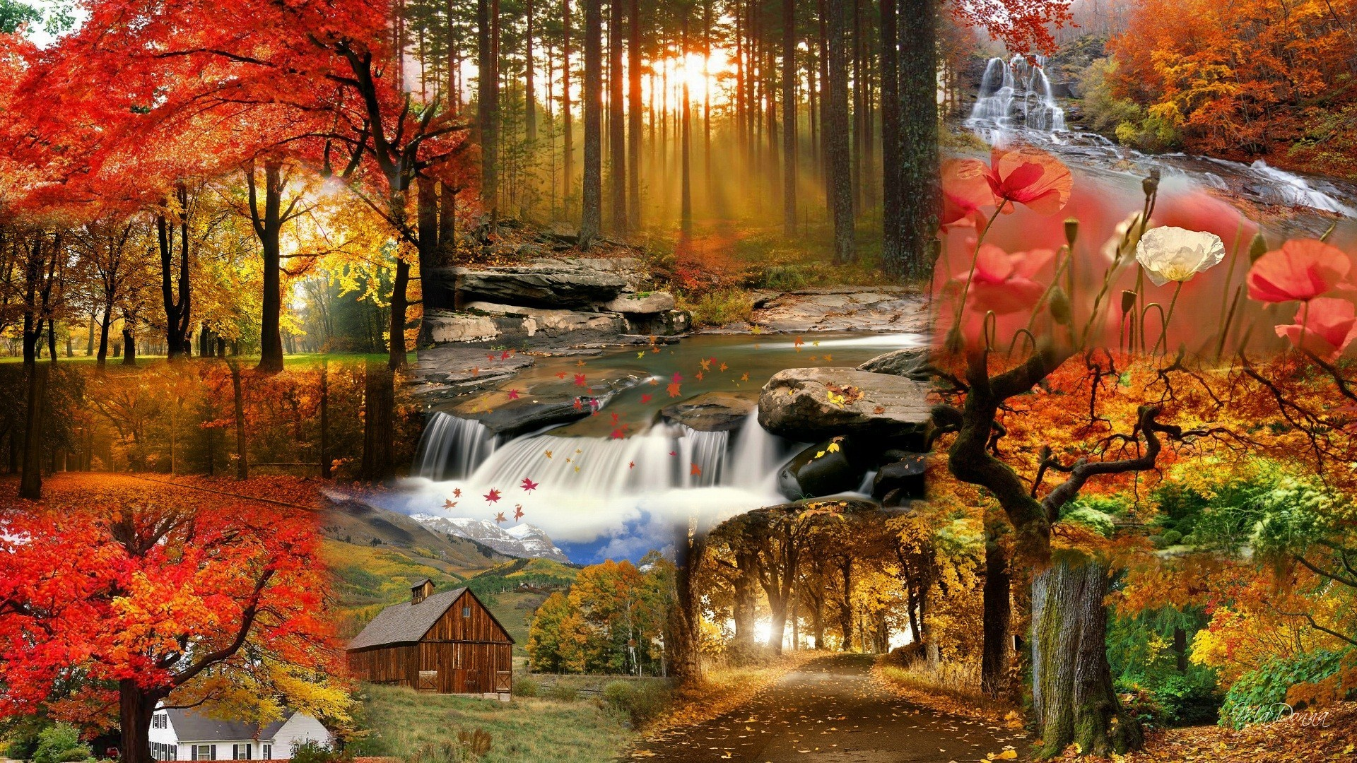 fall flowers wallpapers 65 background pictures