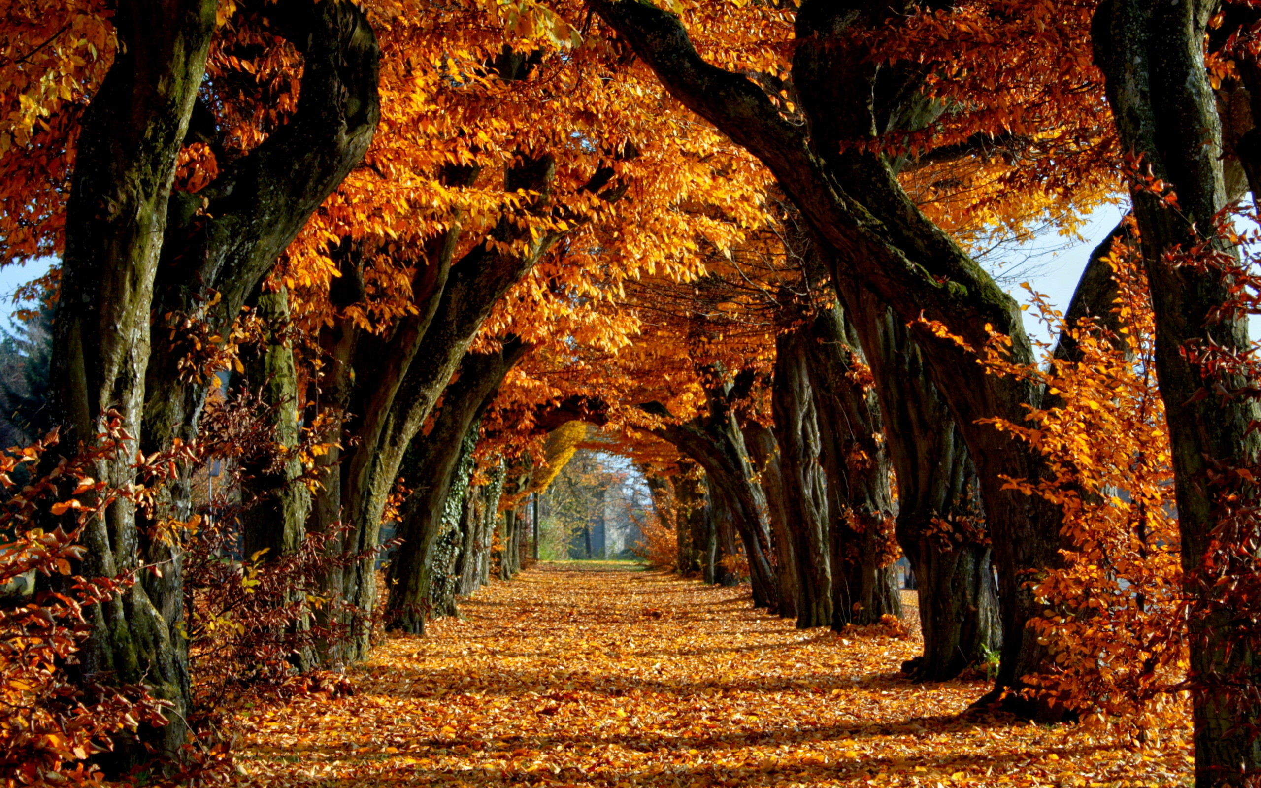 Fall Desktop Wallpapers Backgrounds 71 Background Pictures