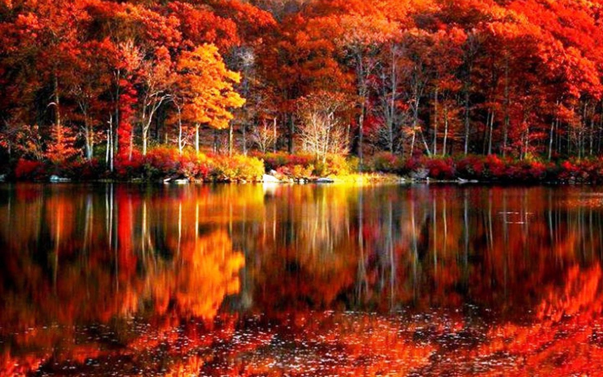 The Best Flowers Fall Colors Wallpapers Background 73 Background Pictures