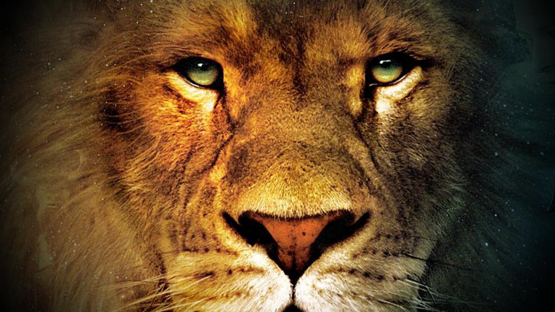 Male Lion Faces Wallpapers (53+ background pictures)
