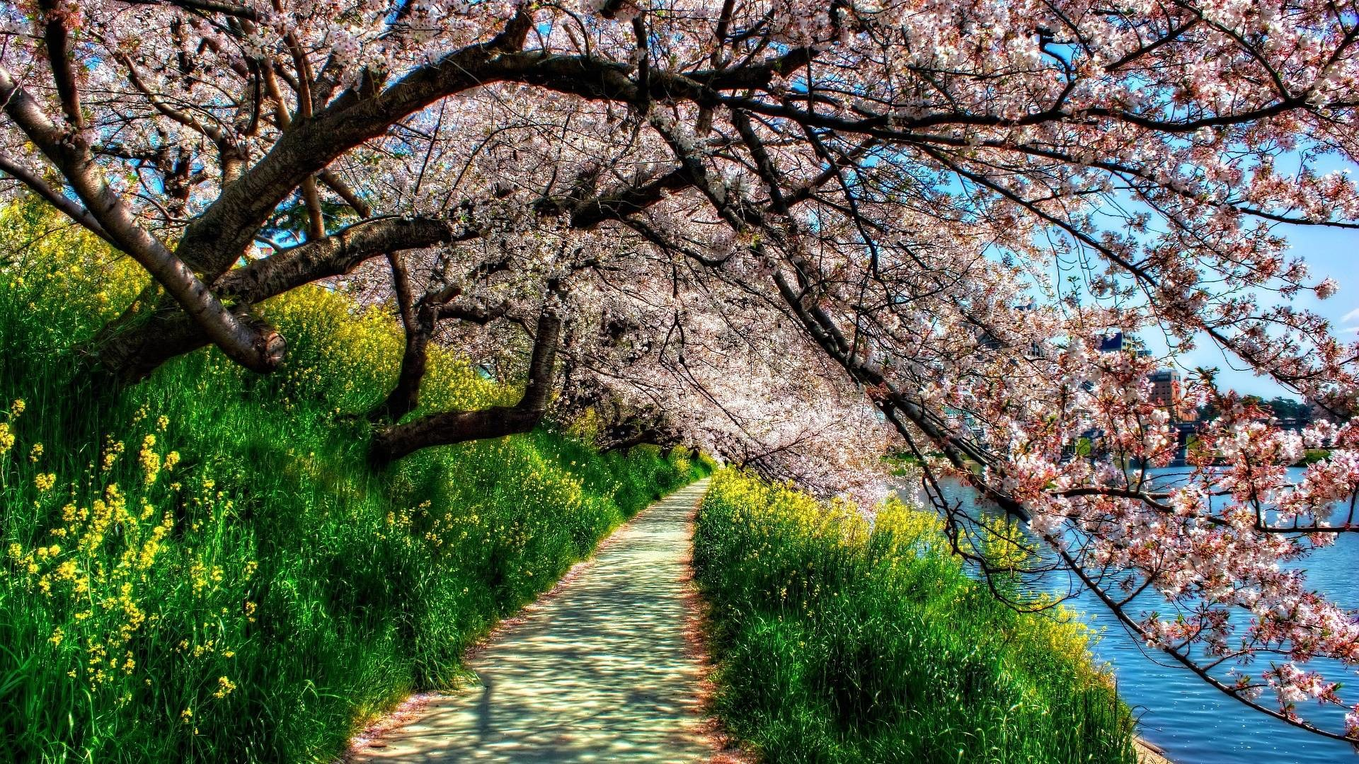 Spring Wallpapers 1920x1080 82 Background Pictures